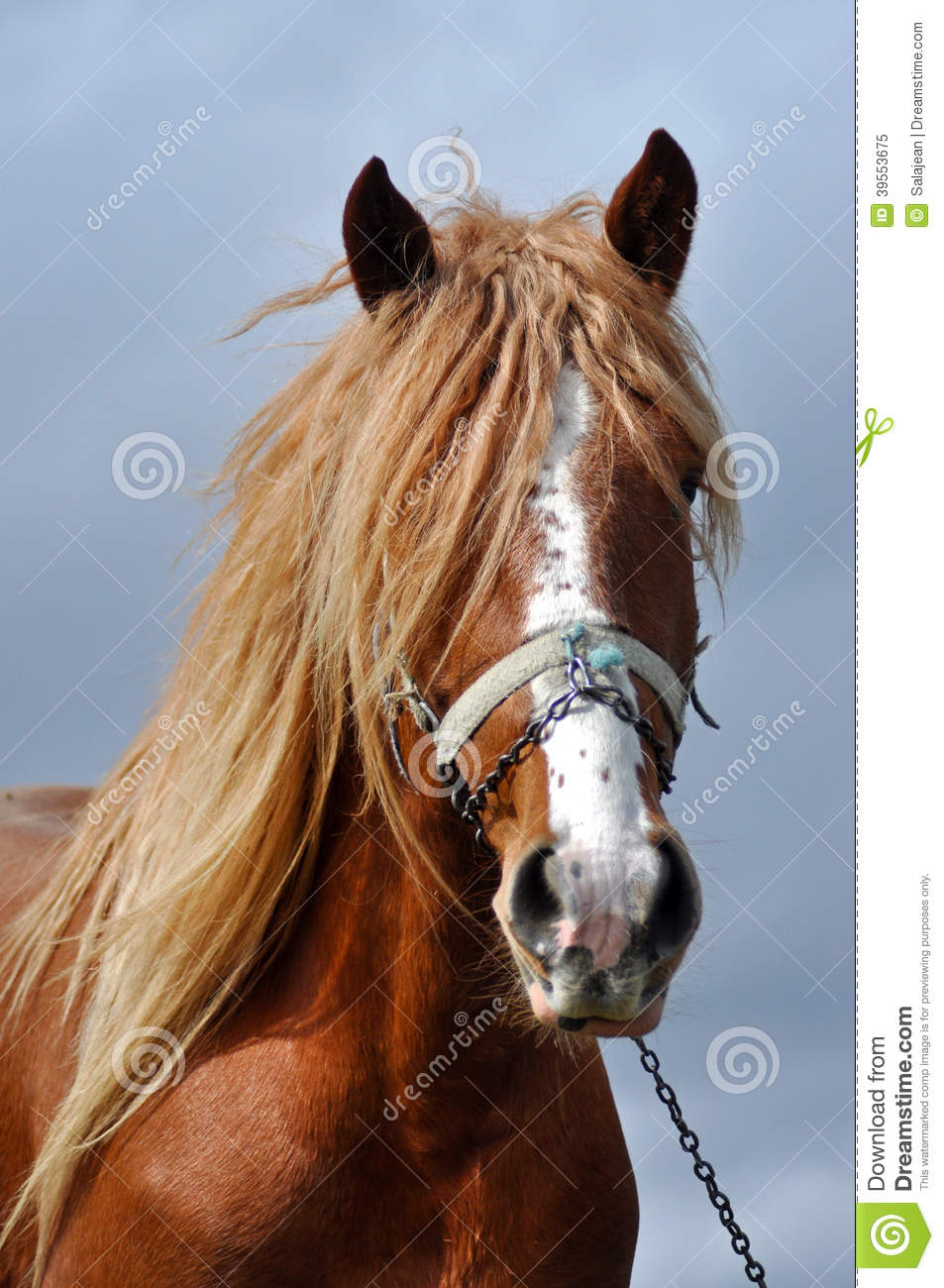 Brown Horse With Blonde Hair Stock Photo Image 39553675