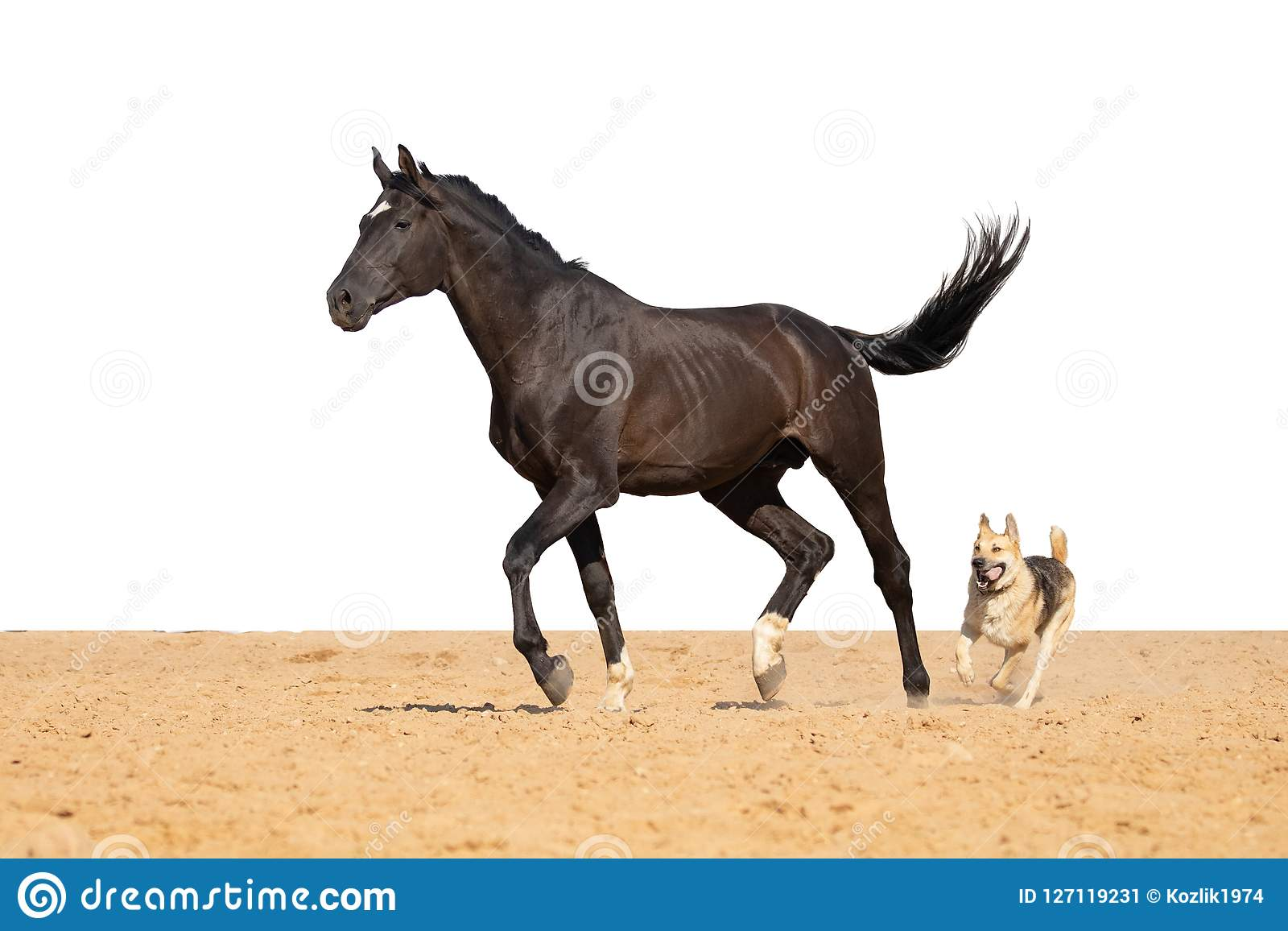 Horse and dog jumps on sand on a white background