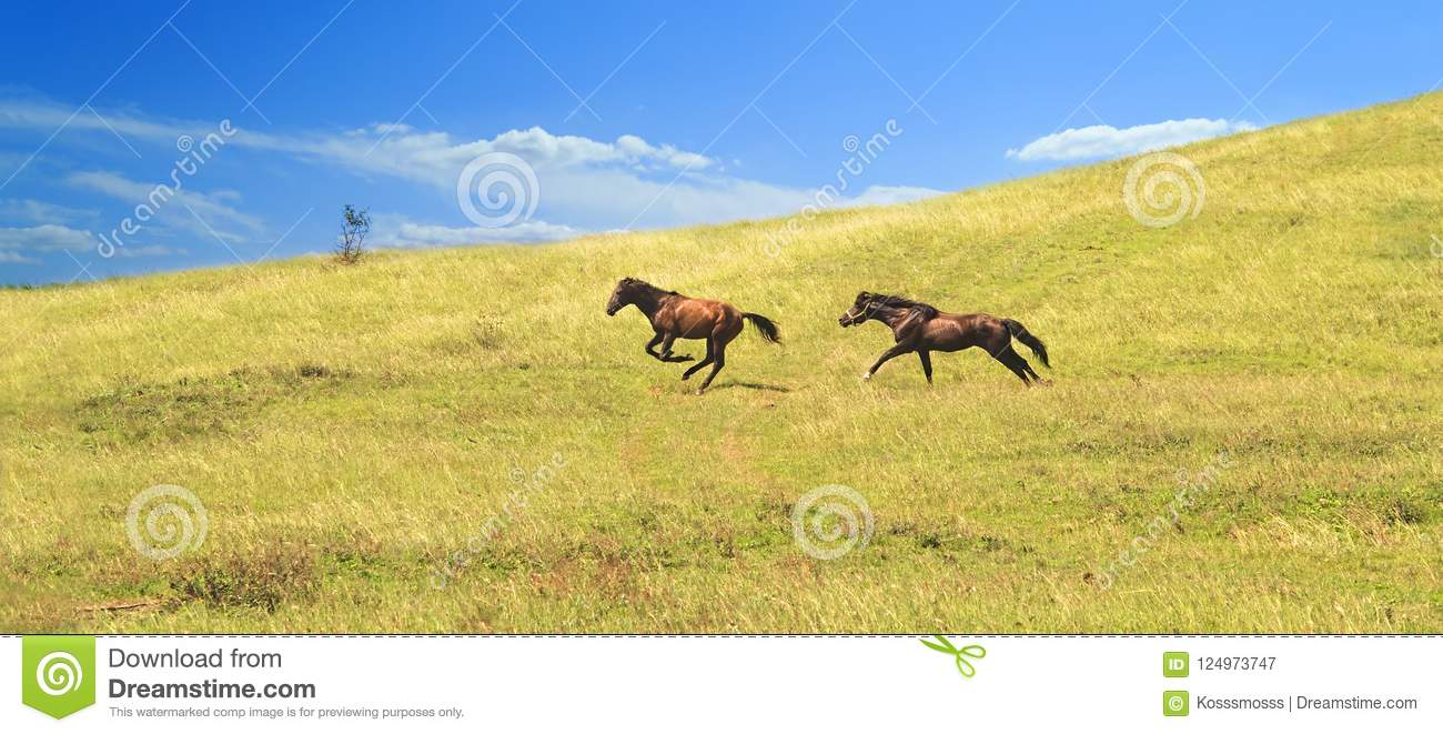 Brown horse drives and runs across the field after another individual proving his leadership qualities