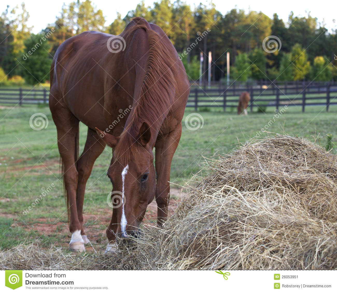 Brown Horse Eating Hay Stock Image Image Of Competition