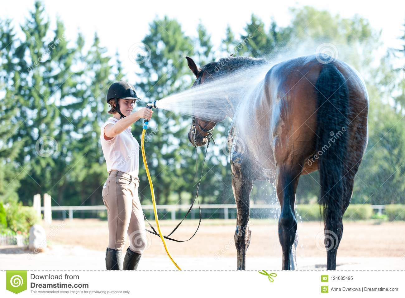 Horse Shower Stock Photos - Download 296 Images