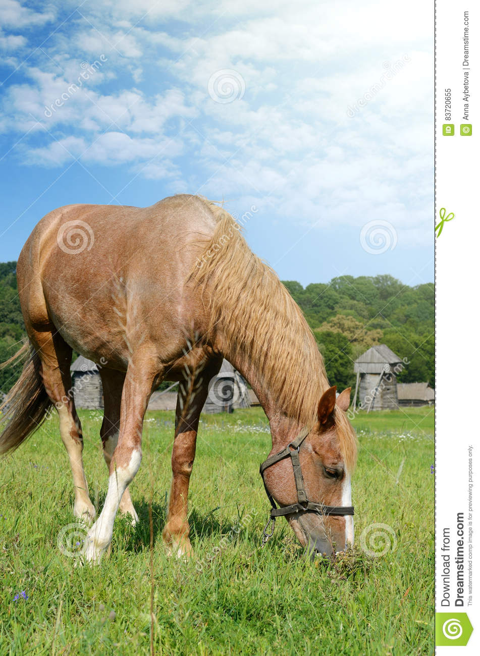 Brown Horse Feeding On A Summer Greenfield. Rustic Scene Stock Photo