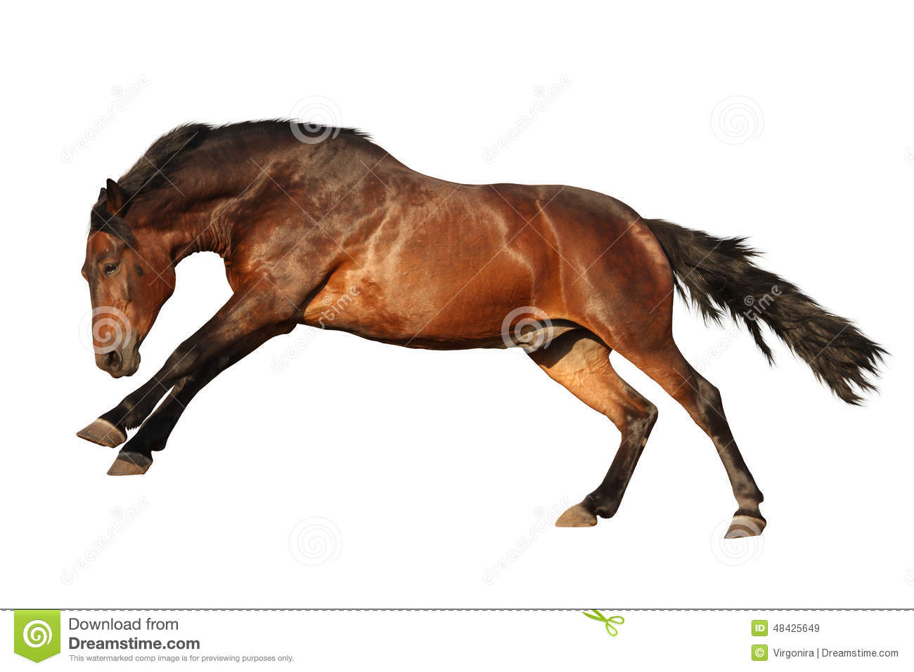 Brown Horse Galloping Isolated On White Stock Photo ...