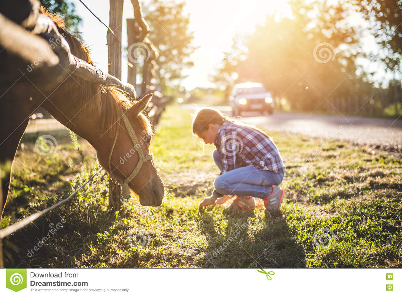 Brown Horse Graze by the fence