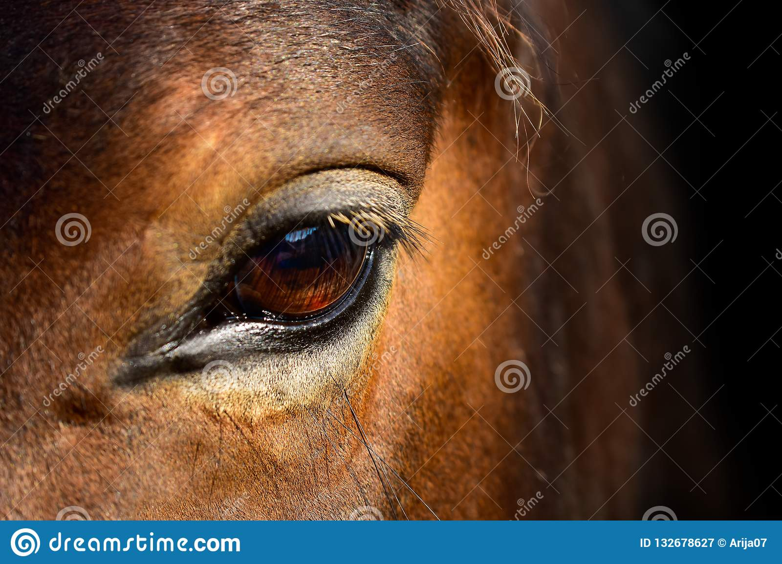 Brown horse head eyes. A closeup portrait of the face of a horse