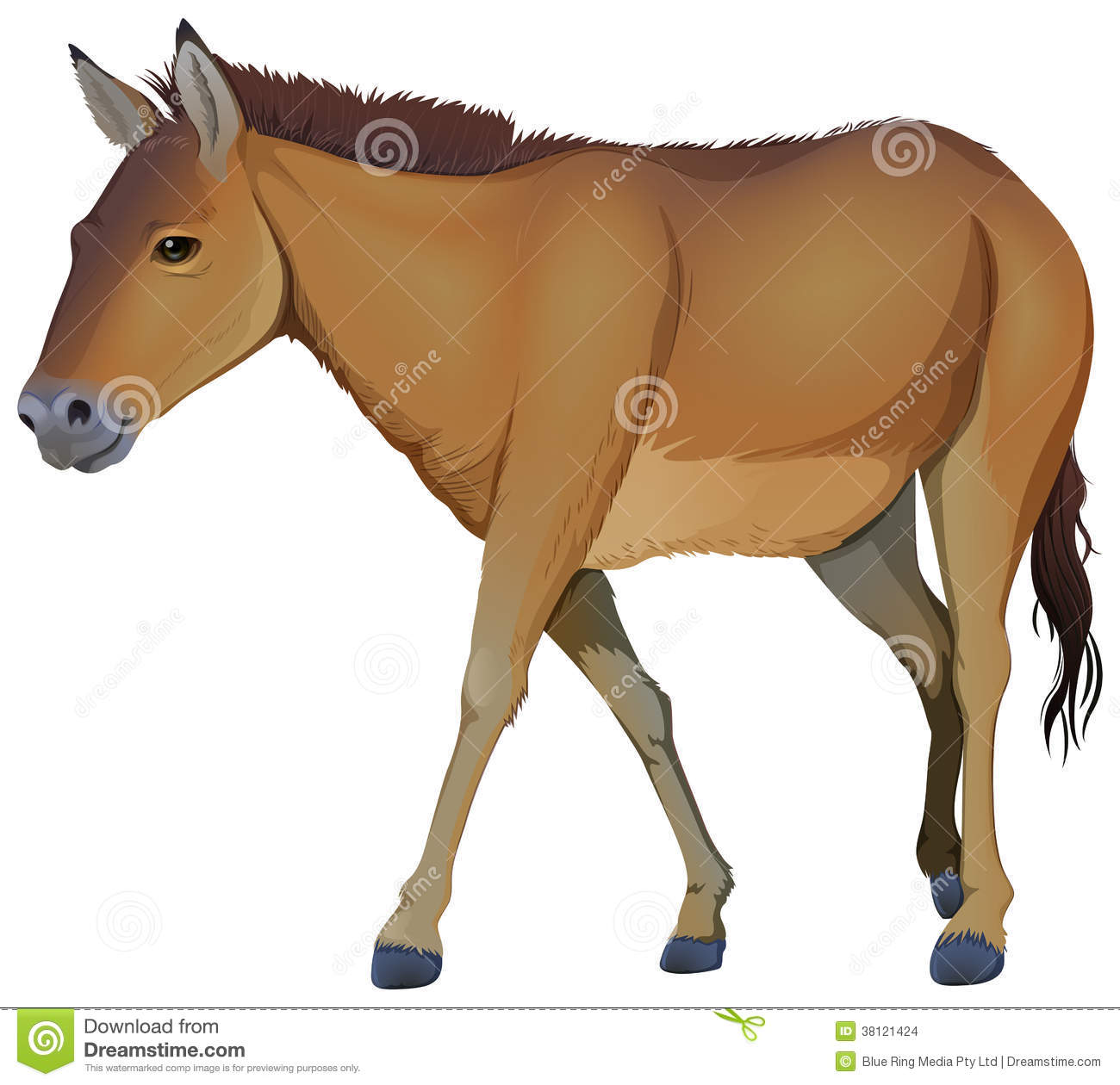 A Brown Horse Stock Images - Image: 38121424