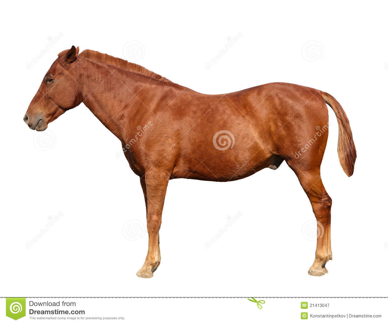 Brown Horse Isolated Royalty Free Stock Photography ...