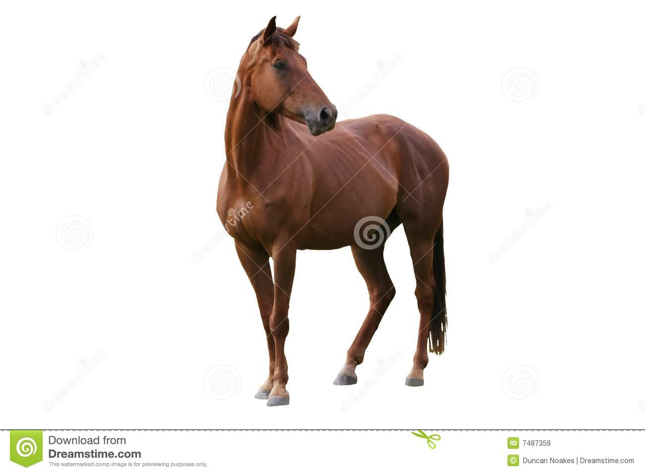 brown horse isolated royalty free stock images image steam clipart steak clip art image