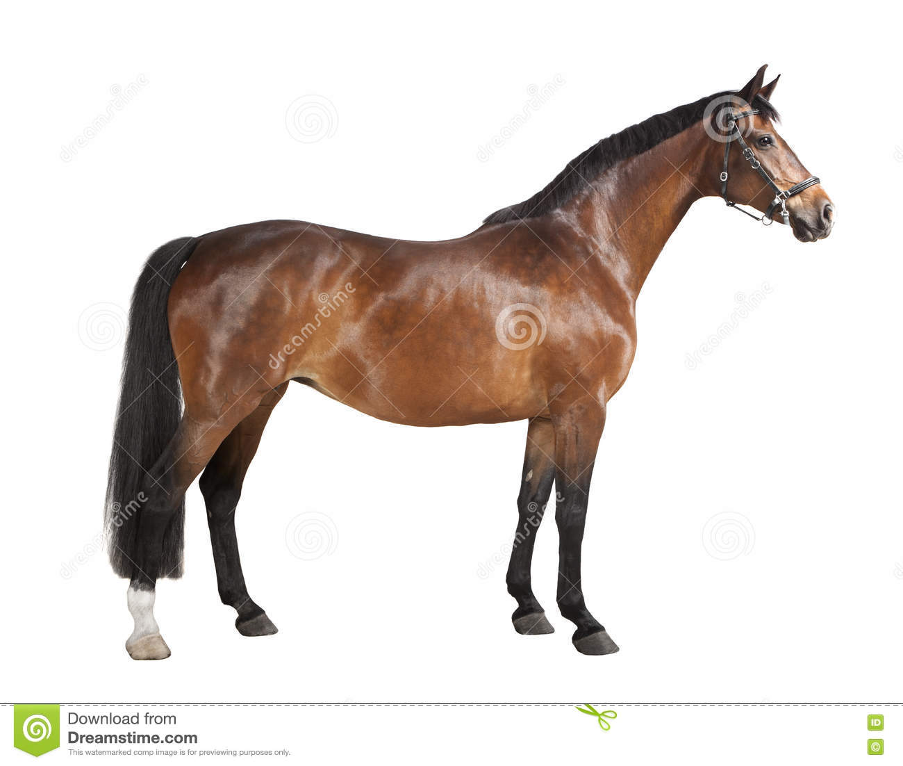 Download Brown horse isolated stock photo. Image of elegance, mare - 73038898