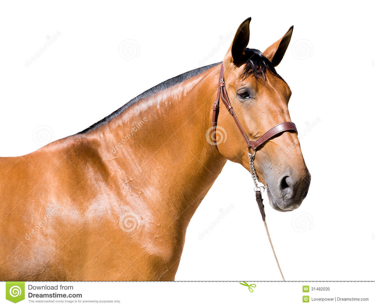 Brown Horse Isolated Royalty Free Stock Photo - Image ...