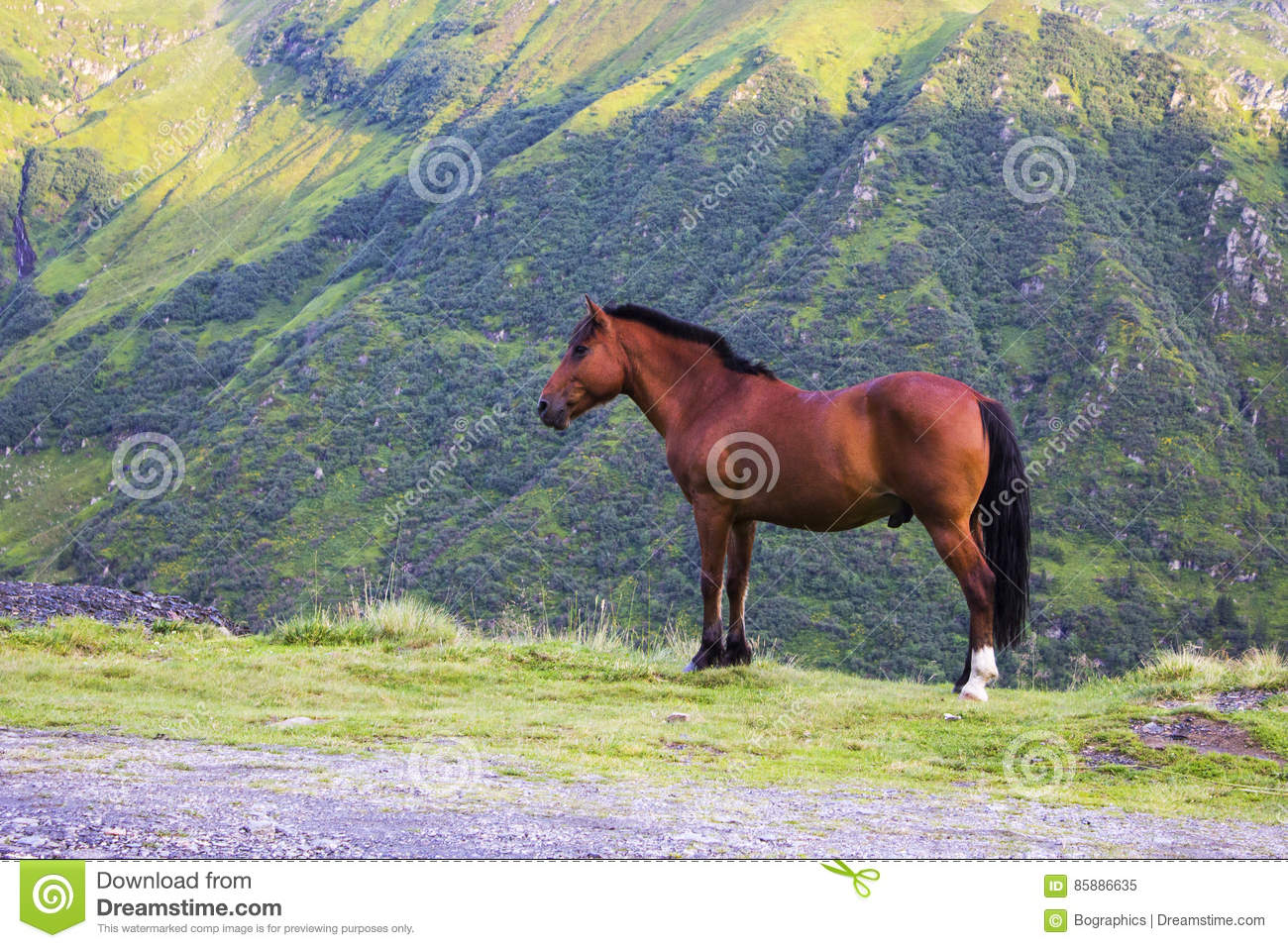 Brown horse on a mountain side view