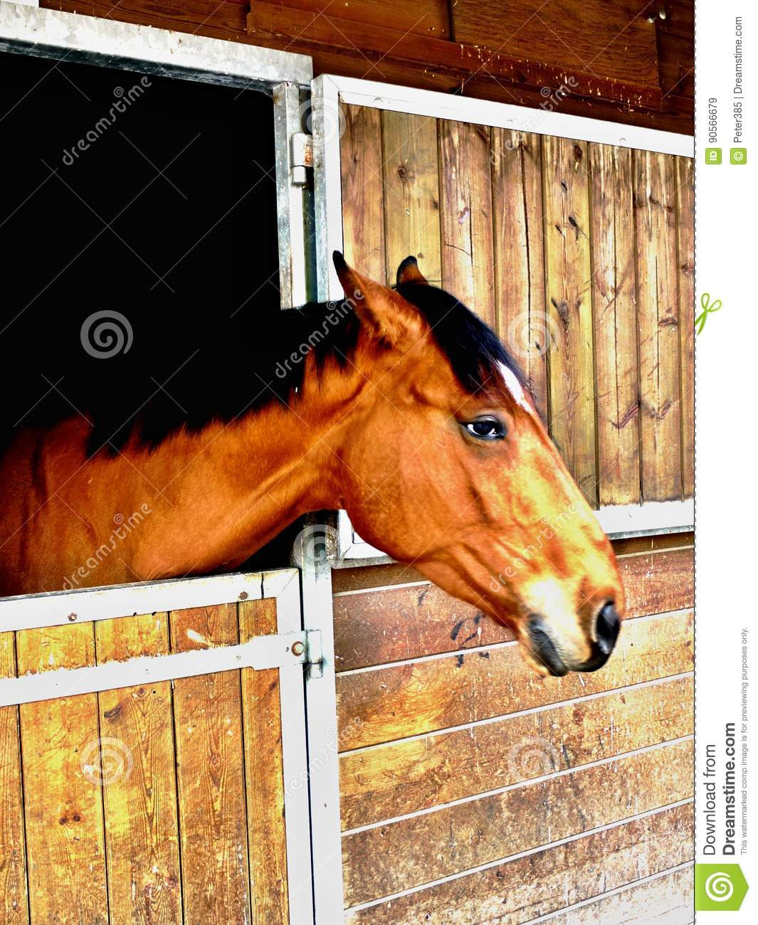 Download Brown horse stock image. Image of mammal, ferus, background - 90566679