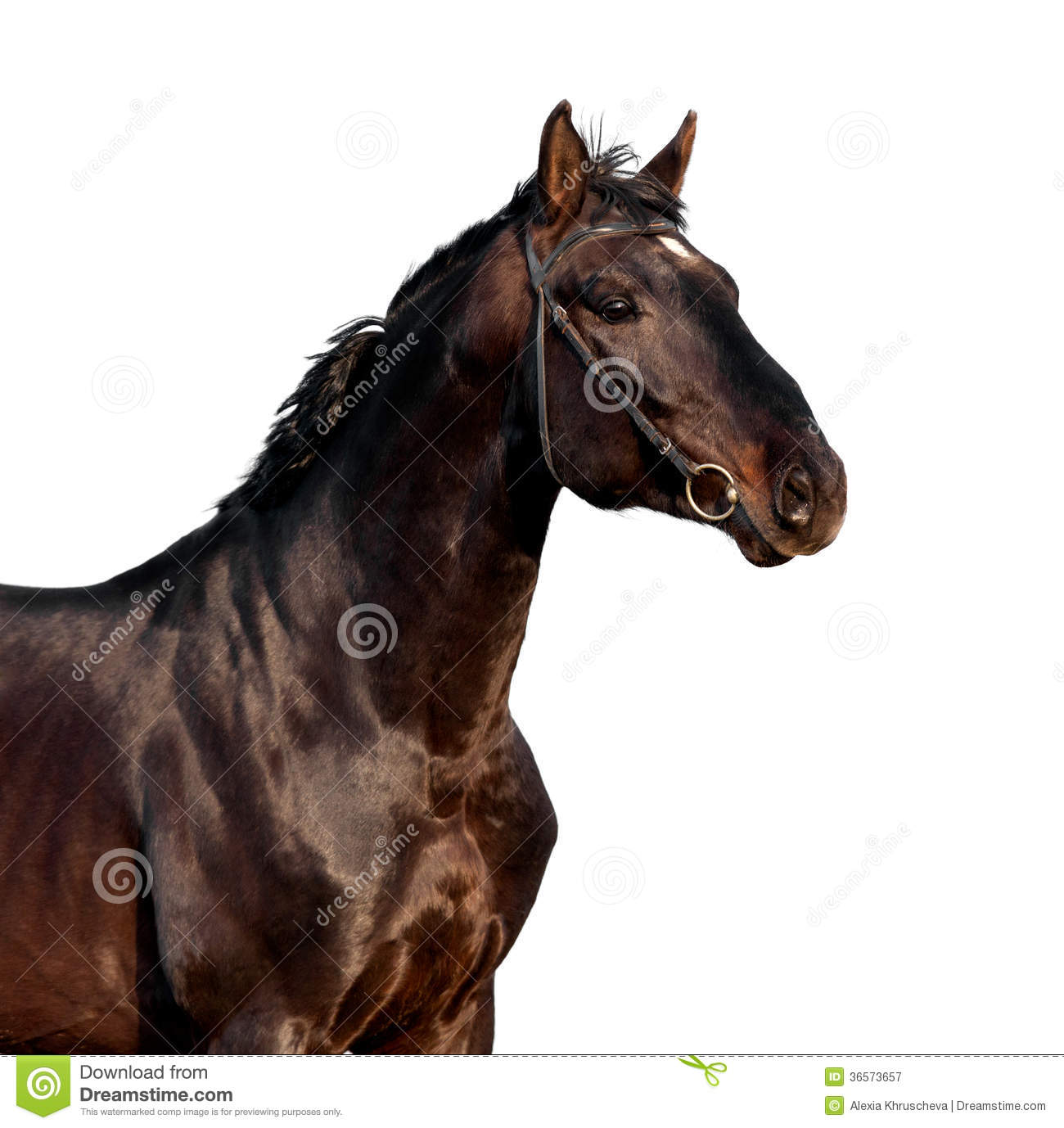 Brown Horse Portrait Isolated On White Background Royalty ...
