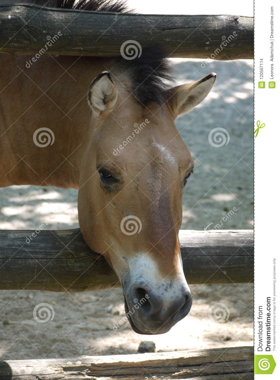 The brown horse stuck his head through the wooden fence. zoo, nature reserve, place of family rest with children