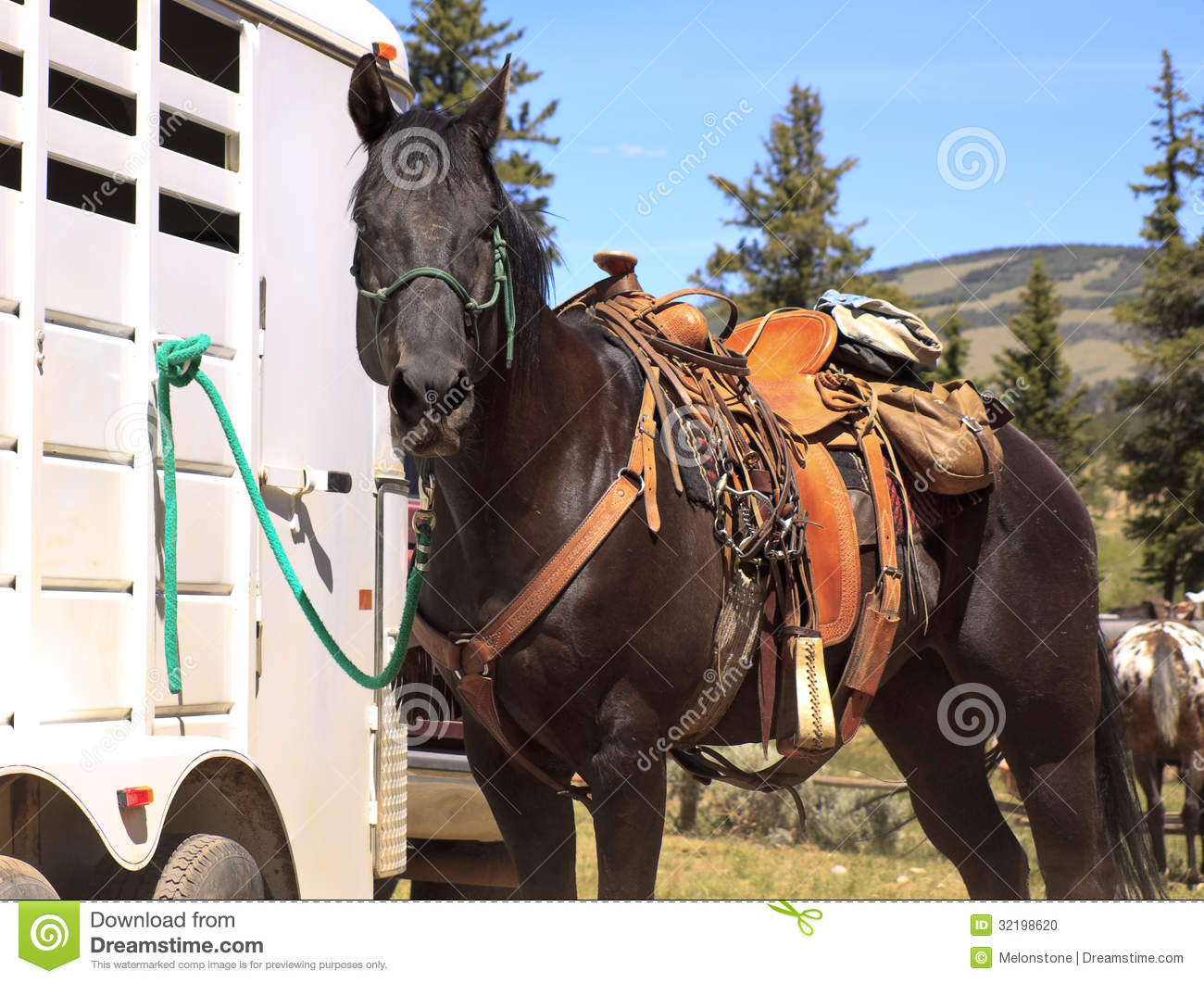 569 Western Horse Tack Photos Free Royalty Free Stock Photos From Dreamstime