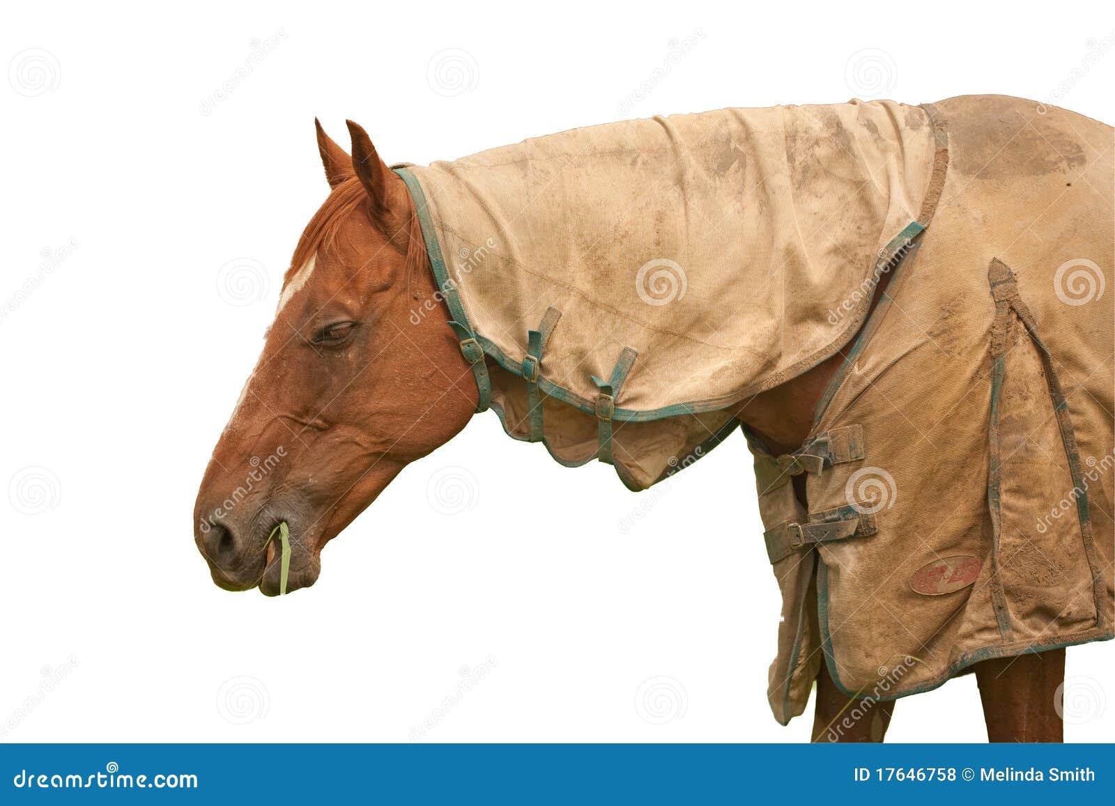 Brown Horse White Background Royalty Free Stock Photos ...