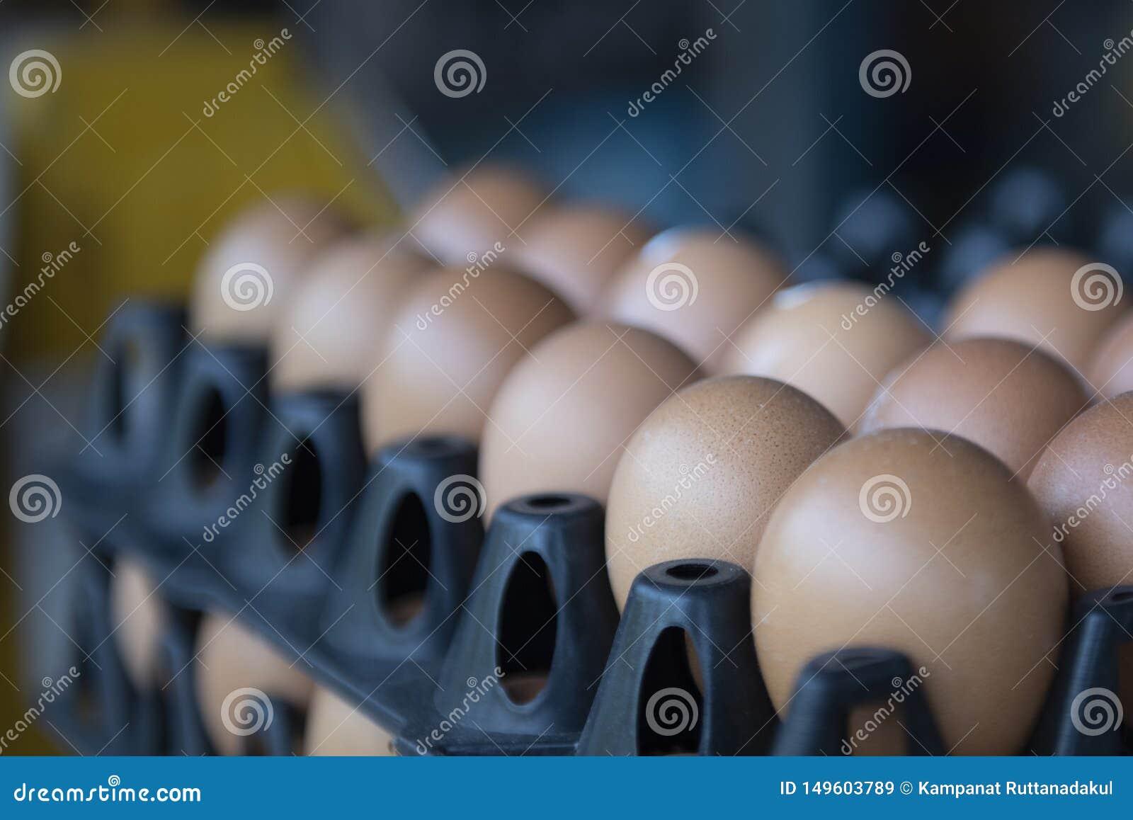 Brown jajka w czarnym panelu
