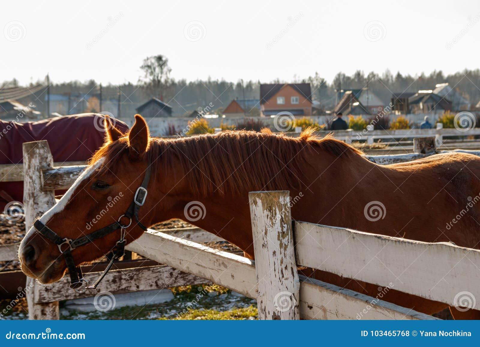 Brown koński patrzeć w odległość