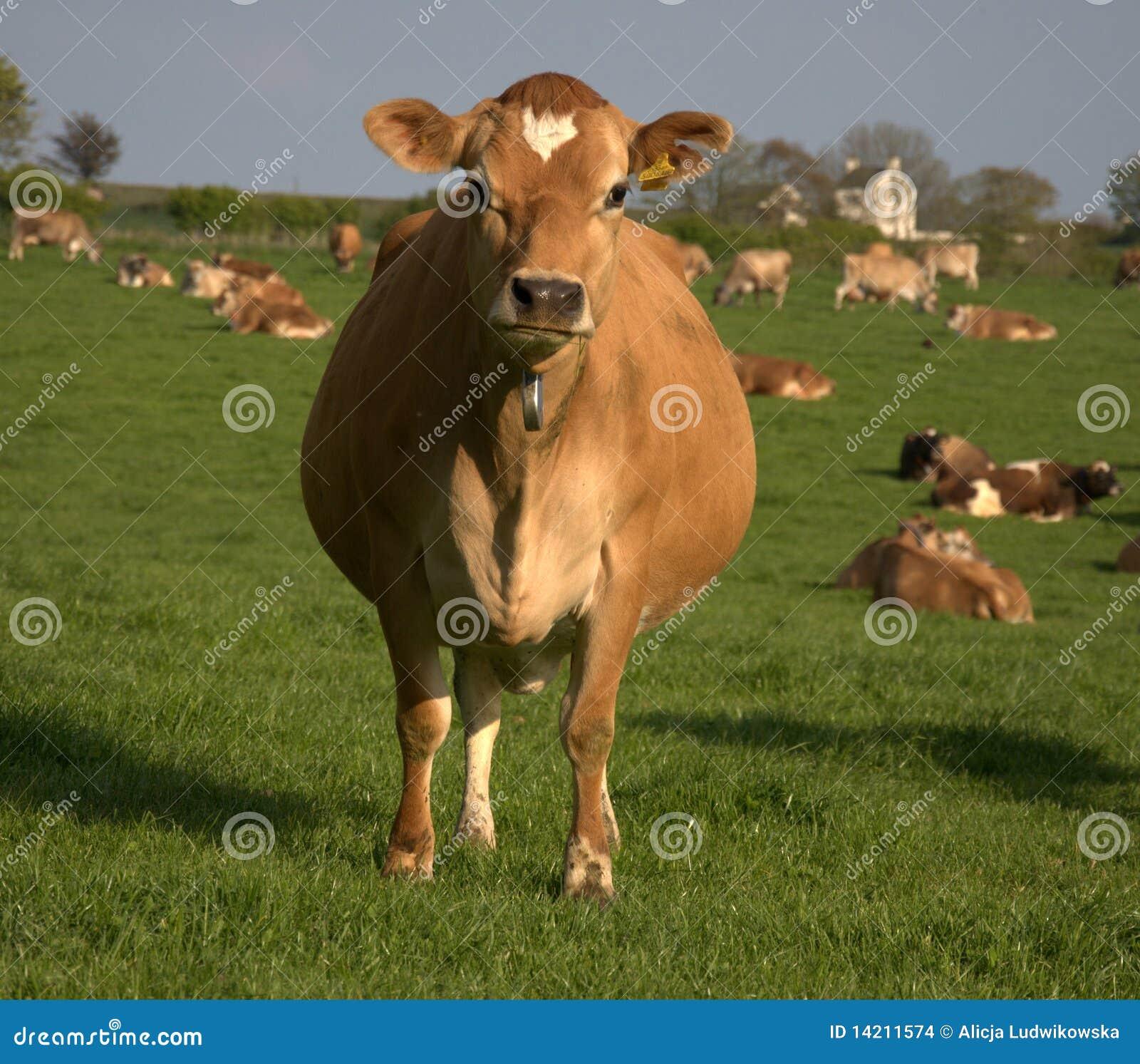 Brown-Kuh