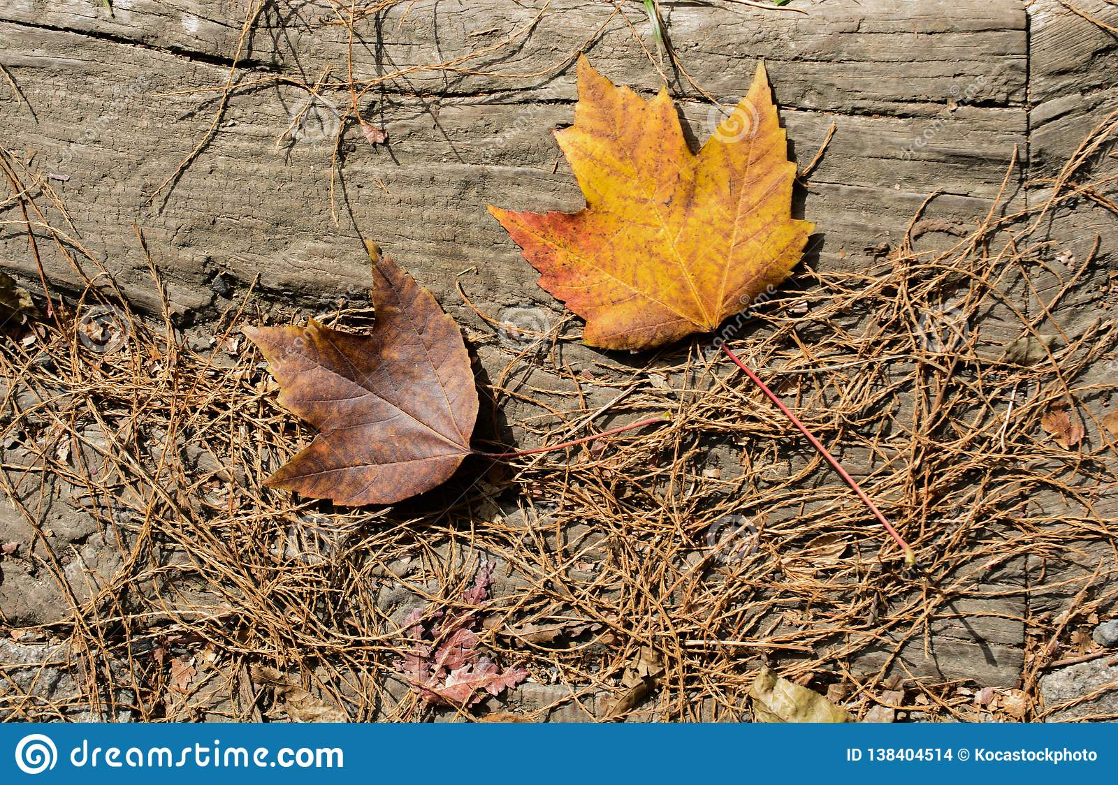 Brown Leaf Texture And Background  Dry Leaves Background