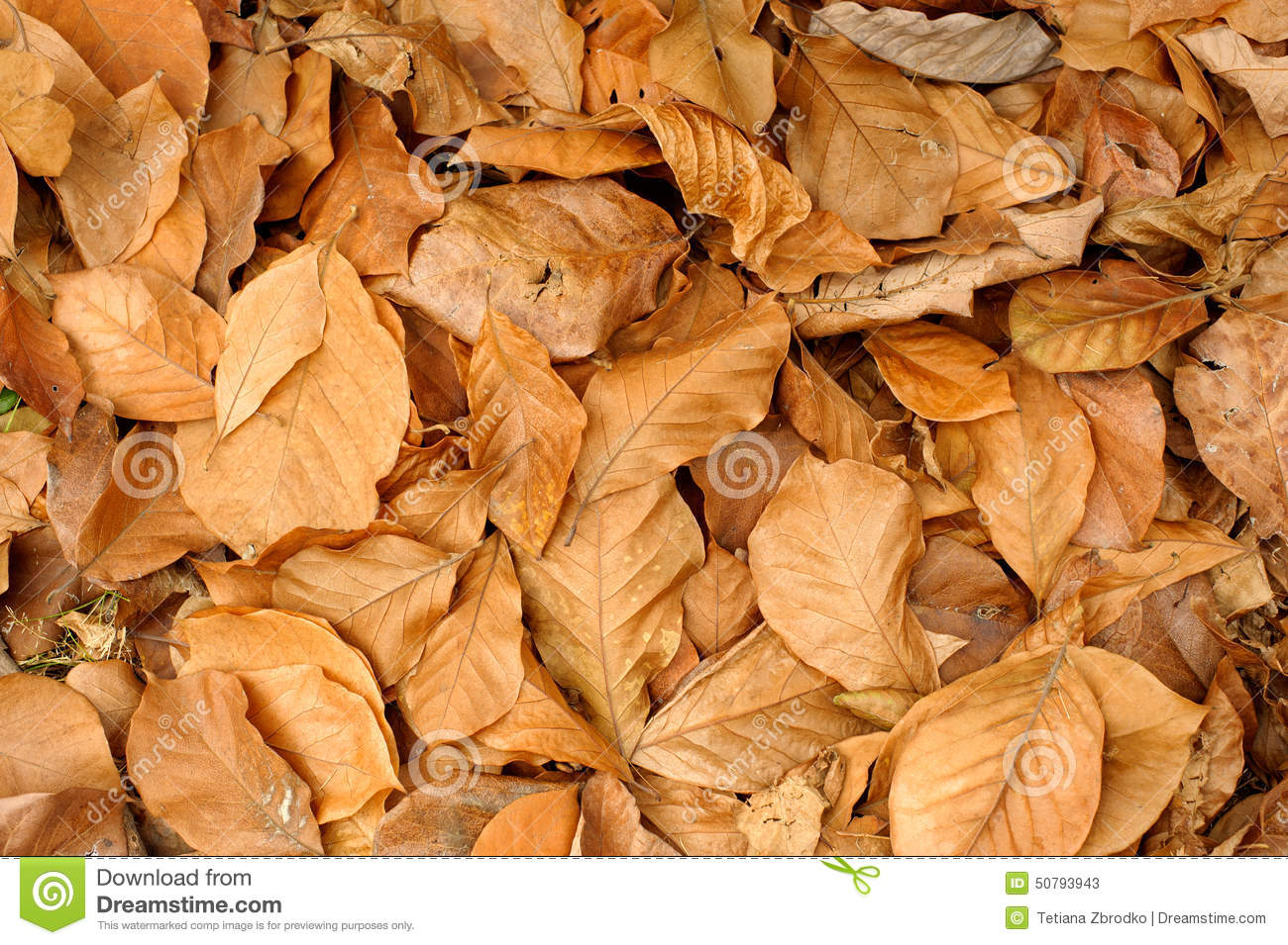 Dry Tree Leaves In A Garden Compost Stock Image