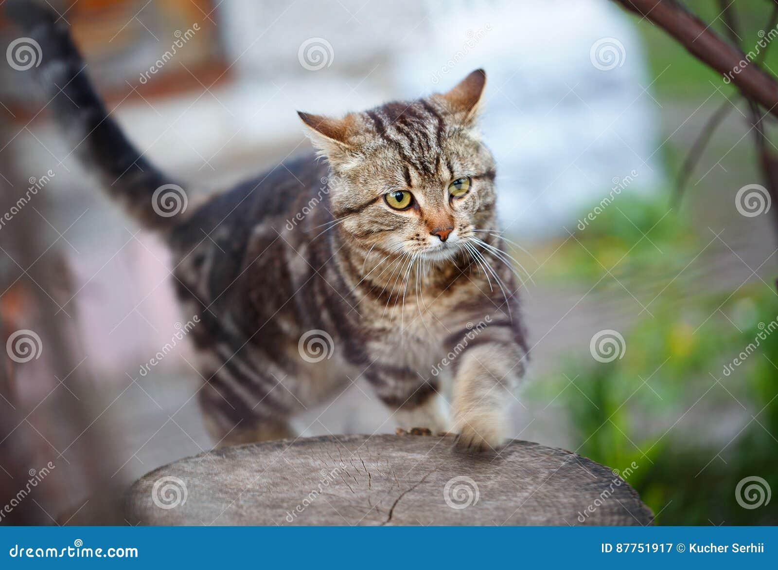 Brown listra o gatinho bonito que anda na grama