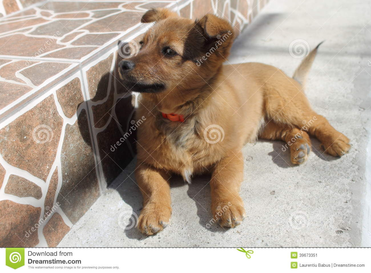 Brown Little Dog Standing On All Fours