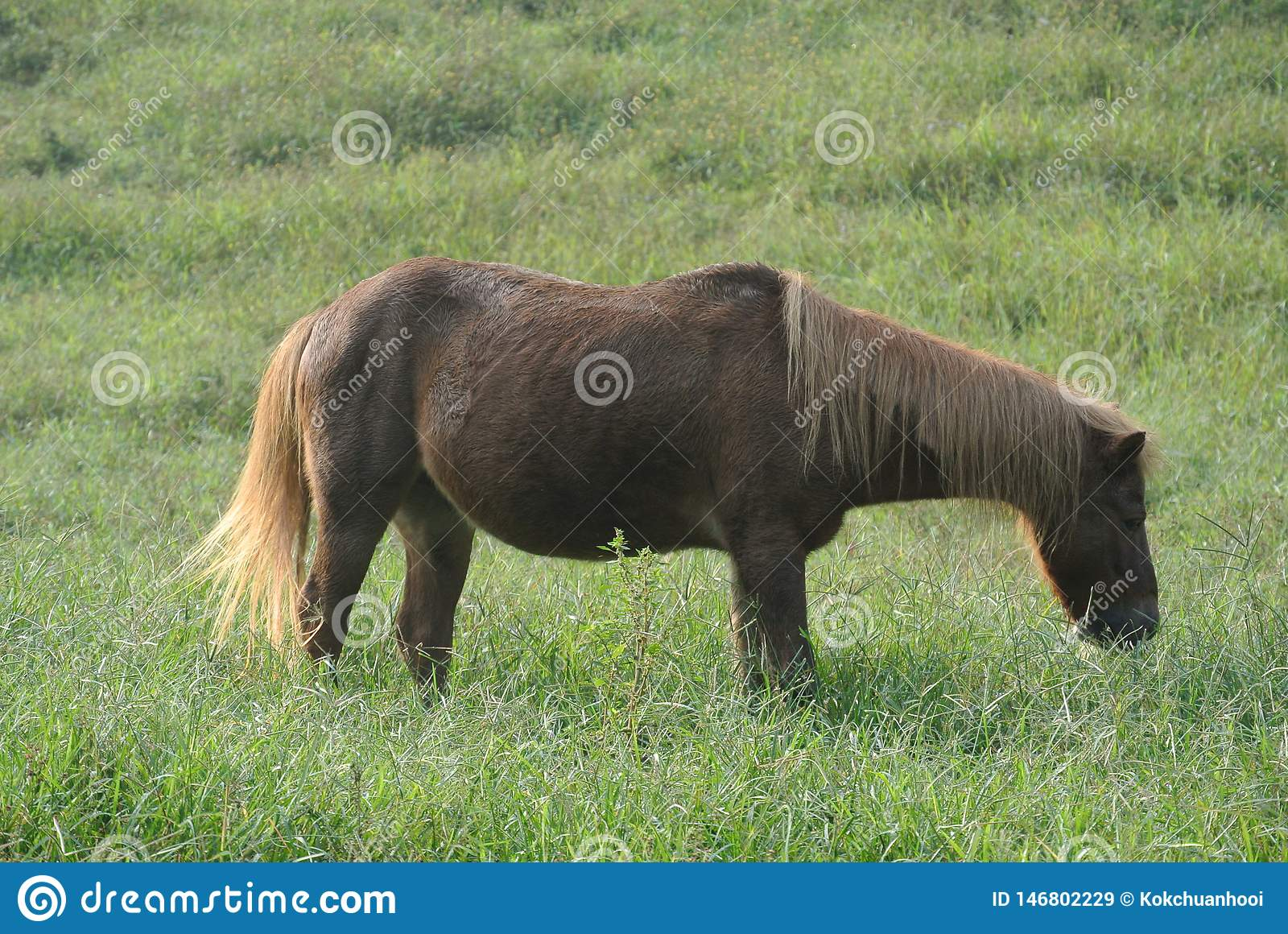 Brown Little Pony in the Green