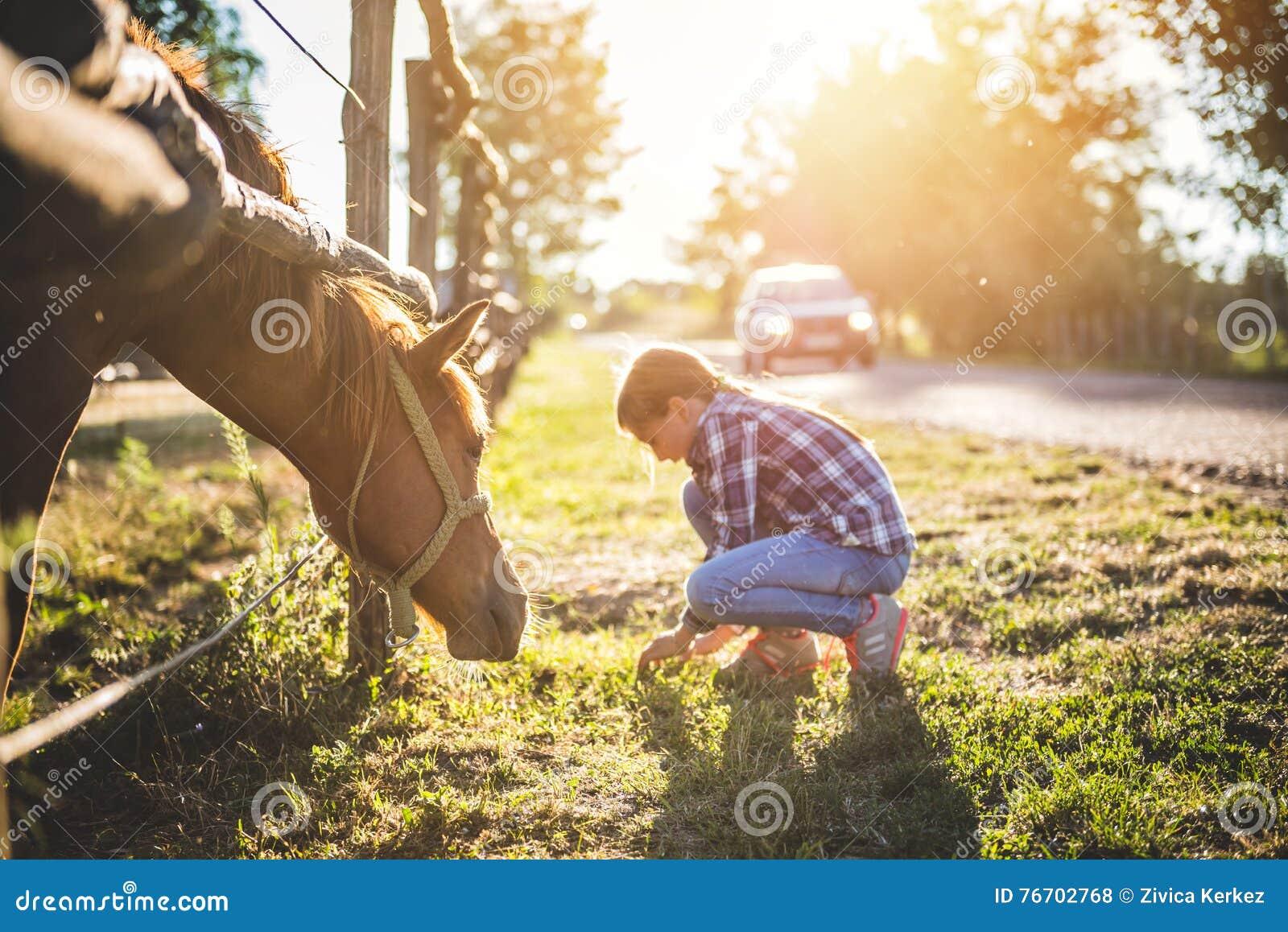Brown-Pferd lassen durch den Zaun weiden