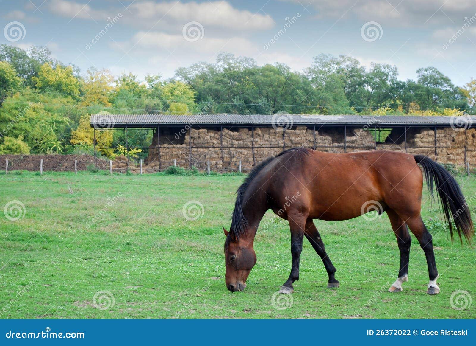 Brown-Pferdenbauernhofszene
