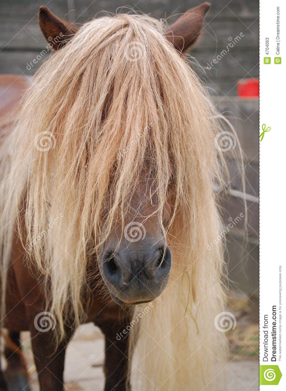 long manes stock photos - photo #1