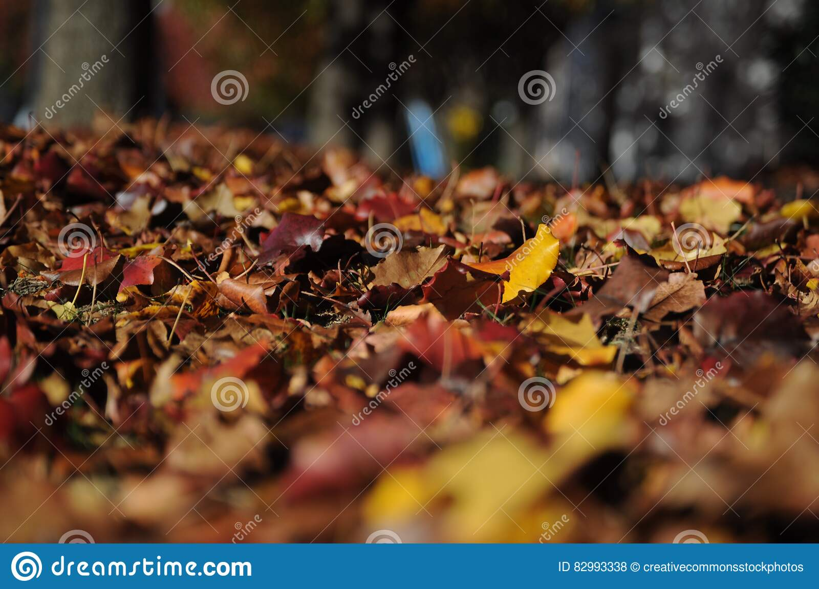 Brown and Red Dried Leaves on Brown Soil
