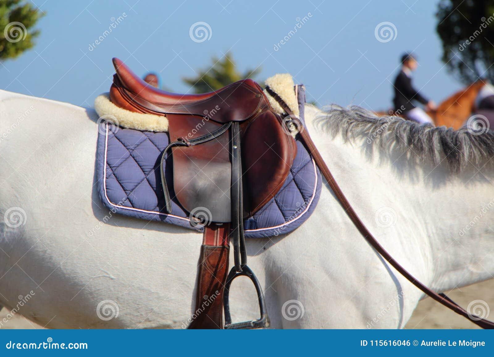 Saddle On A White Horse Stock Photo Image Of Horse 115616046