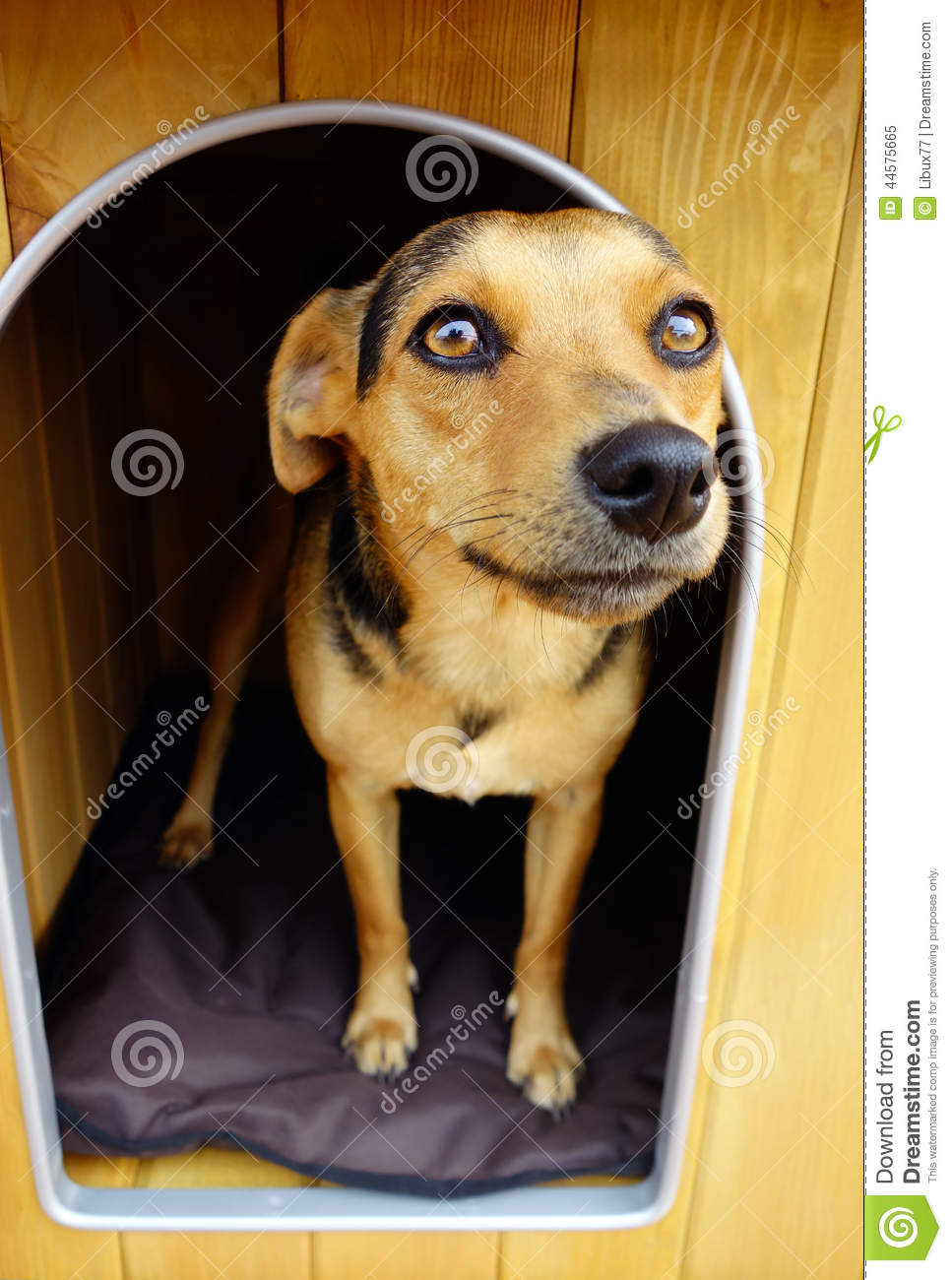 Download Brown Small Dog In Doghouse Shelter Stock Image - Image of cushion, game: 44575665