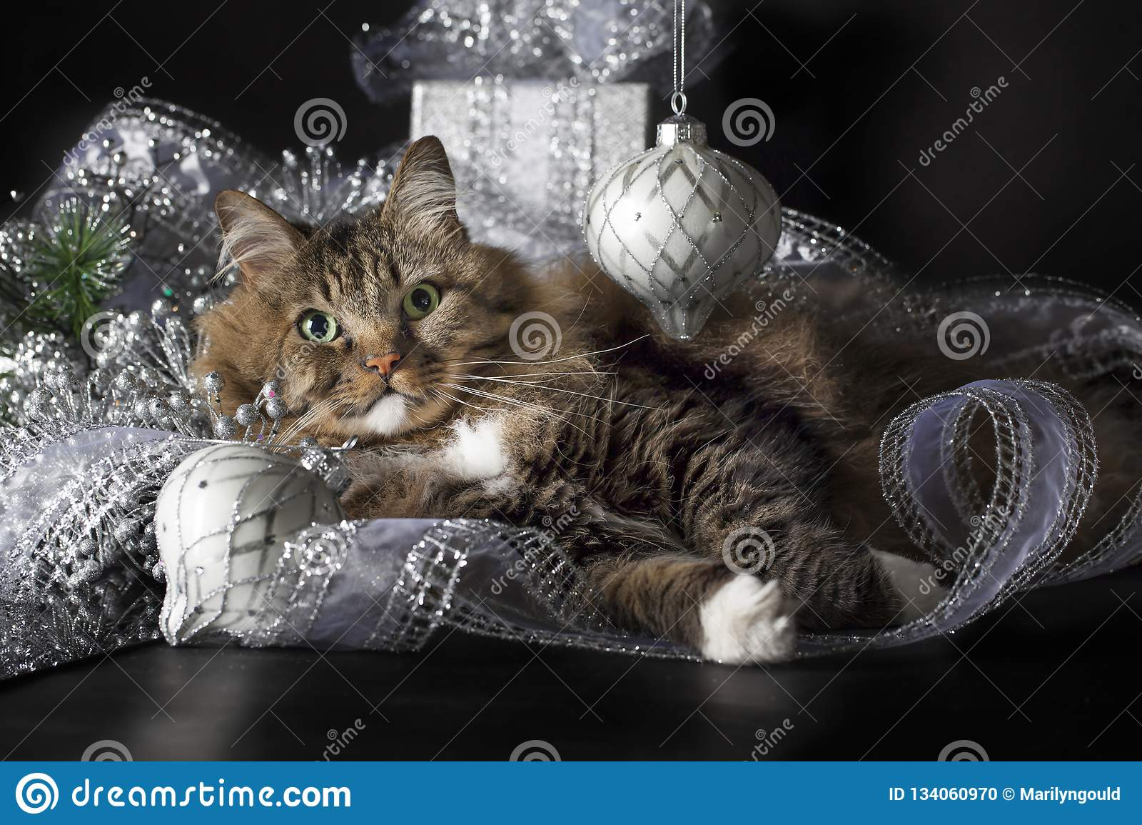 Cat Laying in Silver Christmas Ornaments