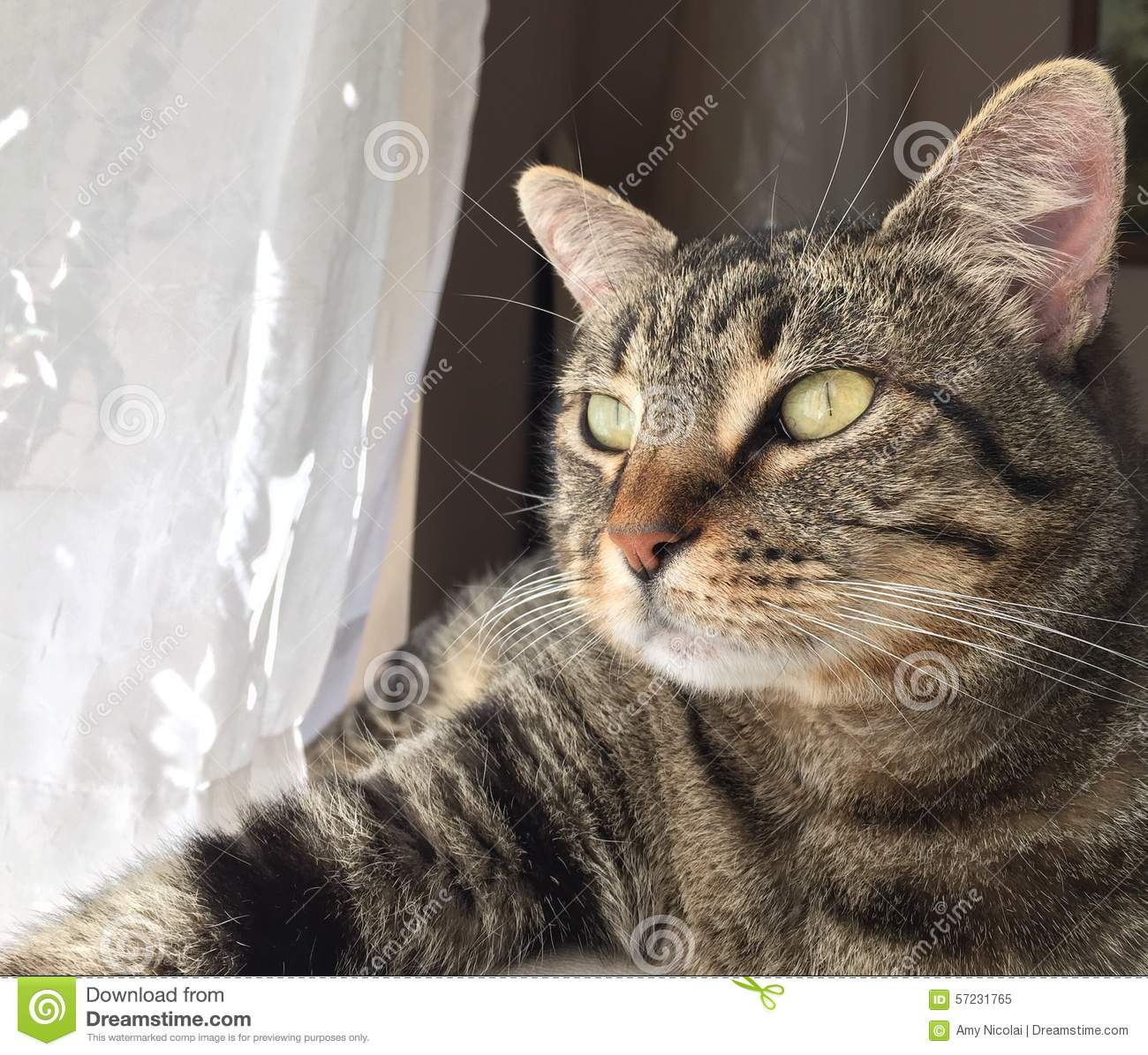 Brown tabby cat gazes into the light