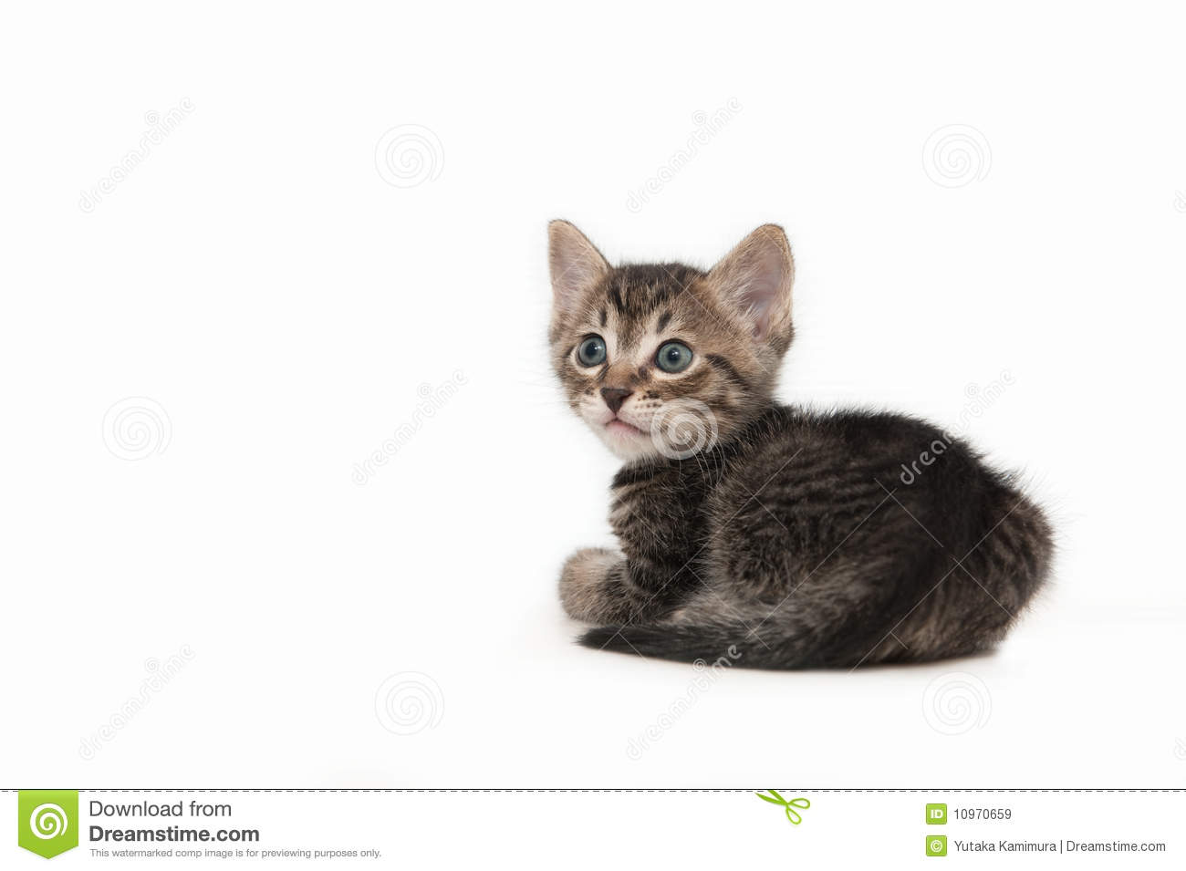 brown tabby kitten male royalty free stock images