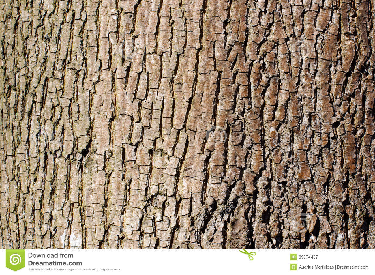 Brown Tree Bark Texture In Landscape Orientation Stock