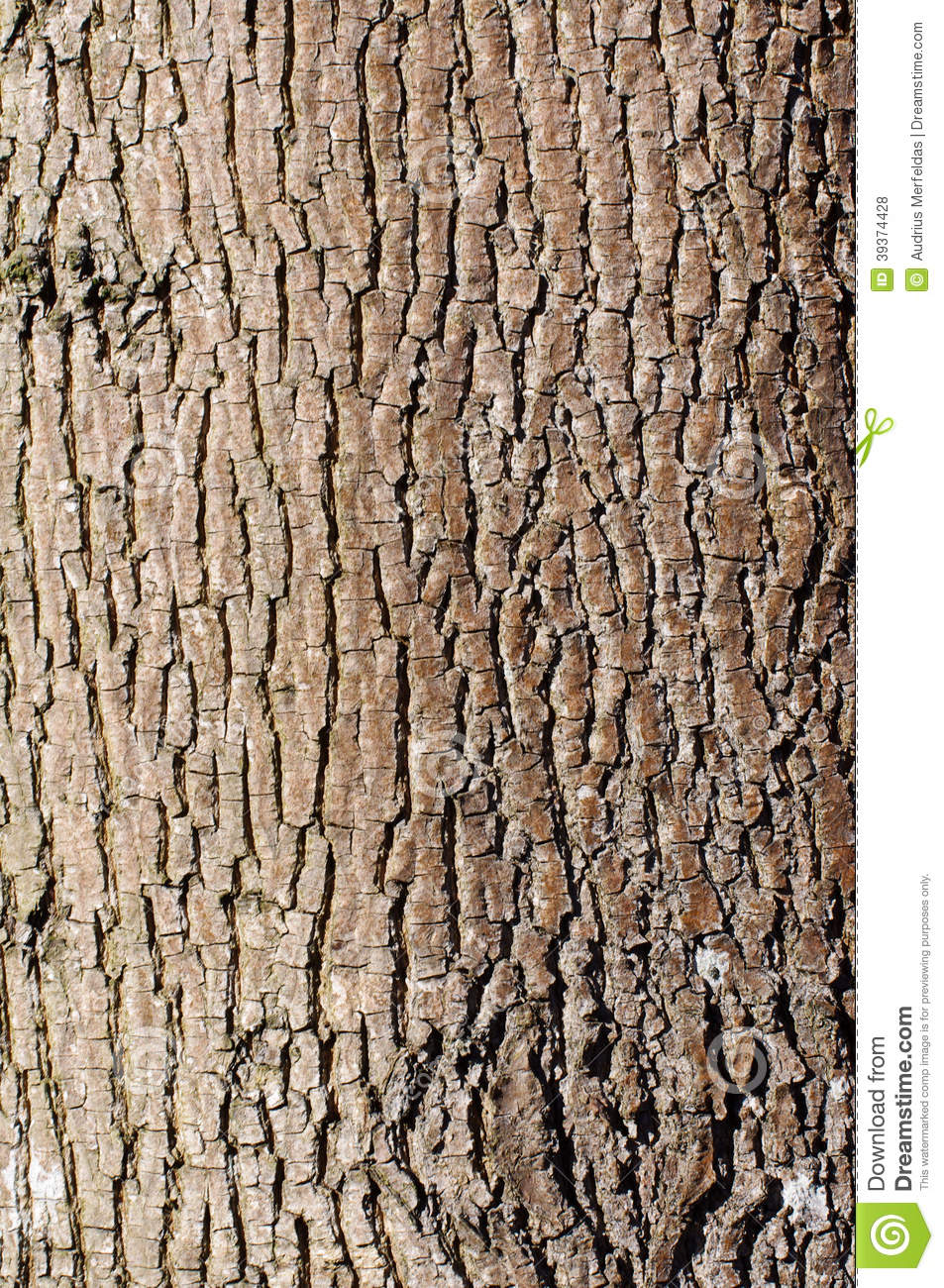 Brown Tree Bark Texture In Portrait Orientation Stock