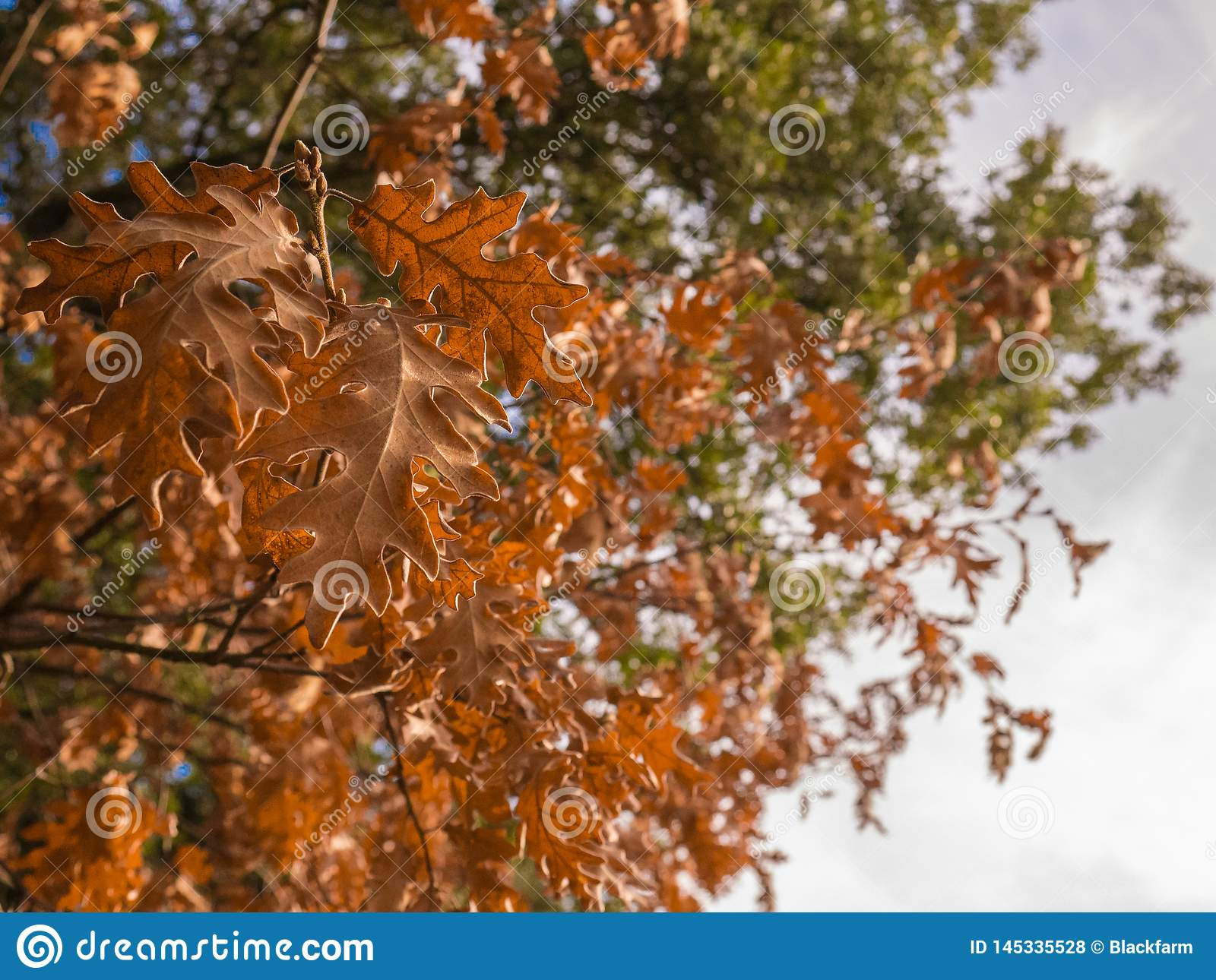 Brown tree leaves at the end of his life