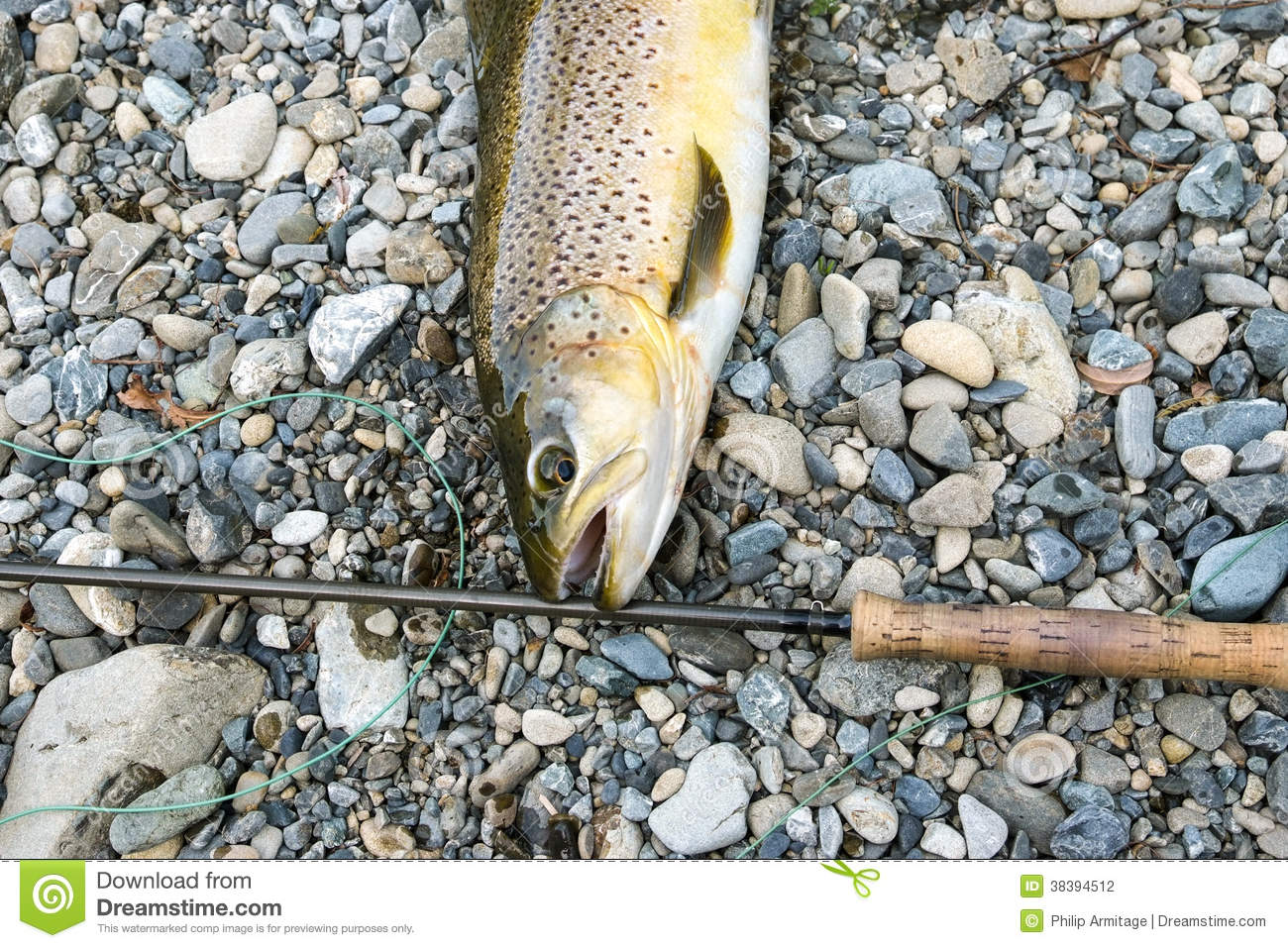 brown trout and fly rod stock photography - image: 38394512, Fly Fishing Bait