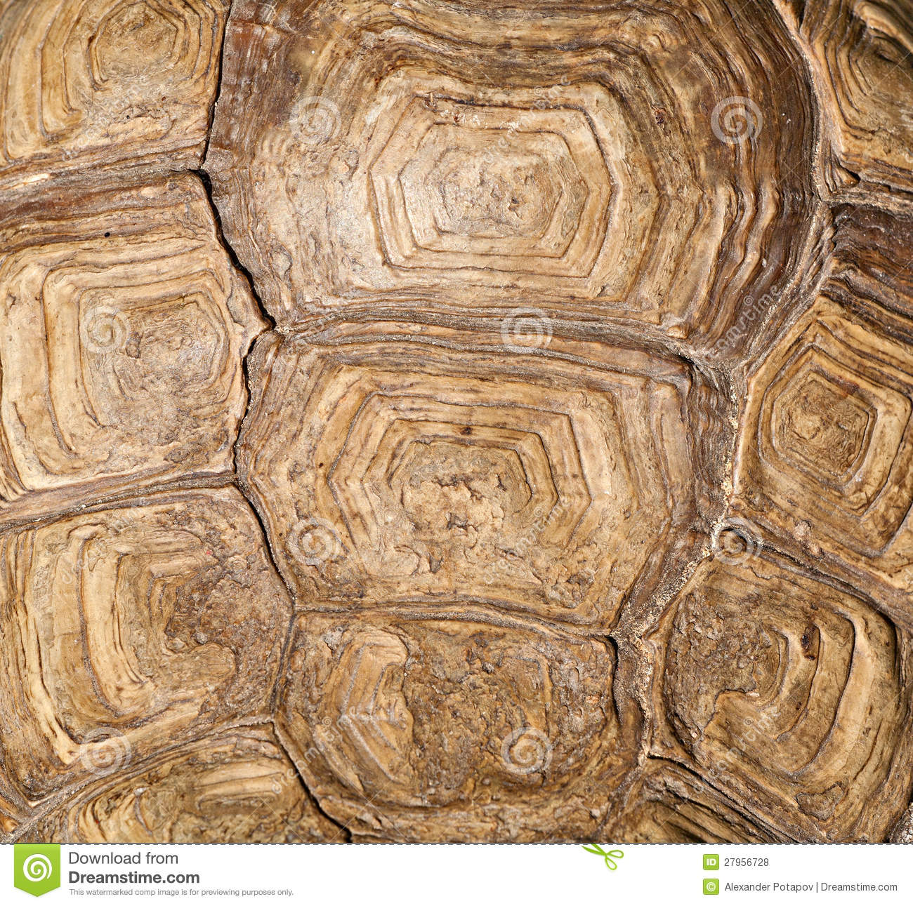 brown turtle shell background royalty free stock photos
