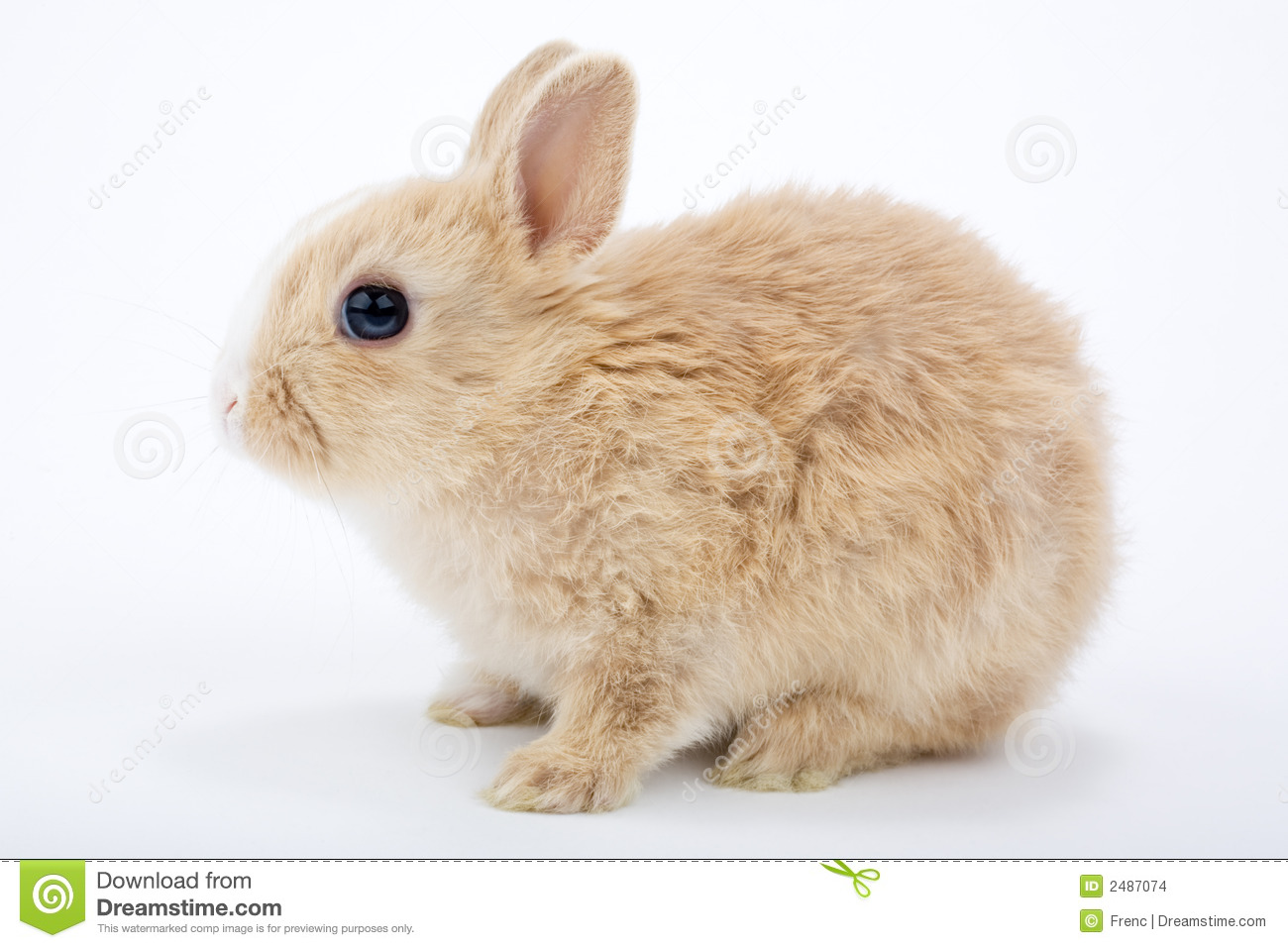 Brown-white Bunny Stock Images - Image: 2487074
