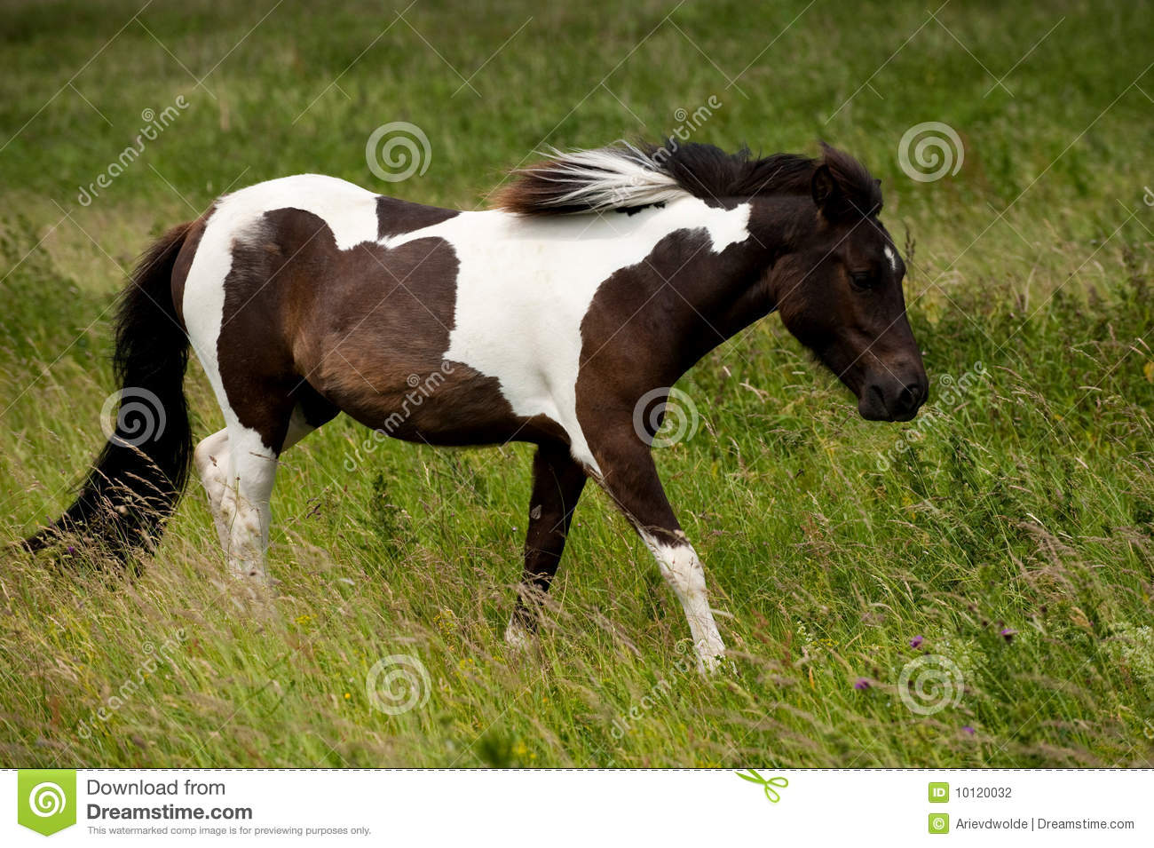 A brown white horse stock photo. Image of seasonal, brown