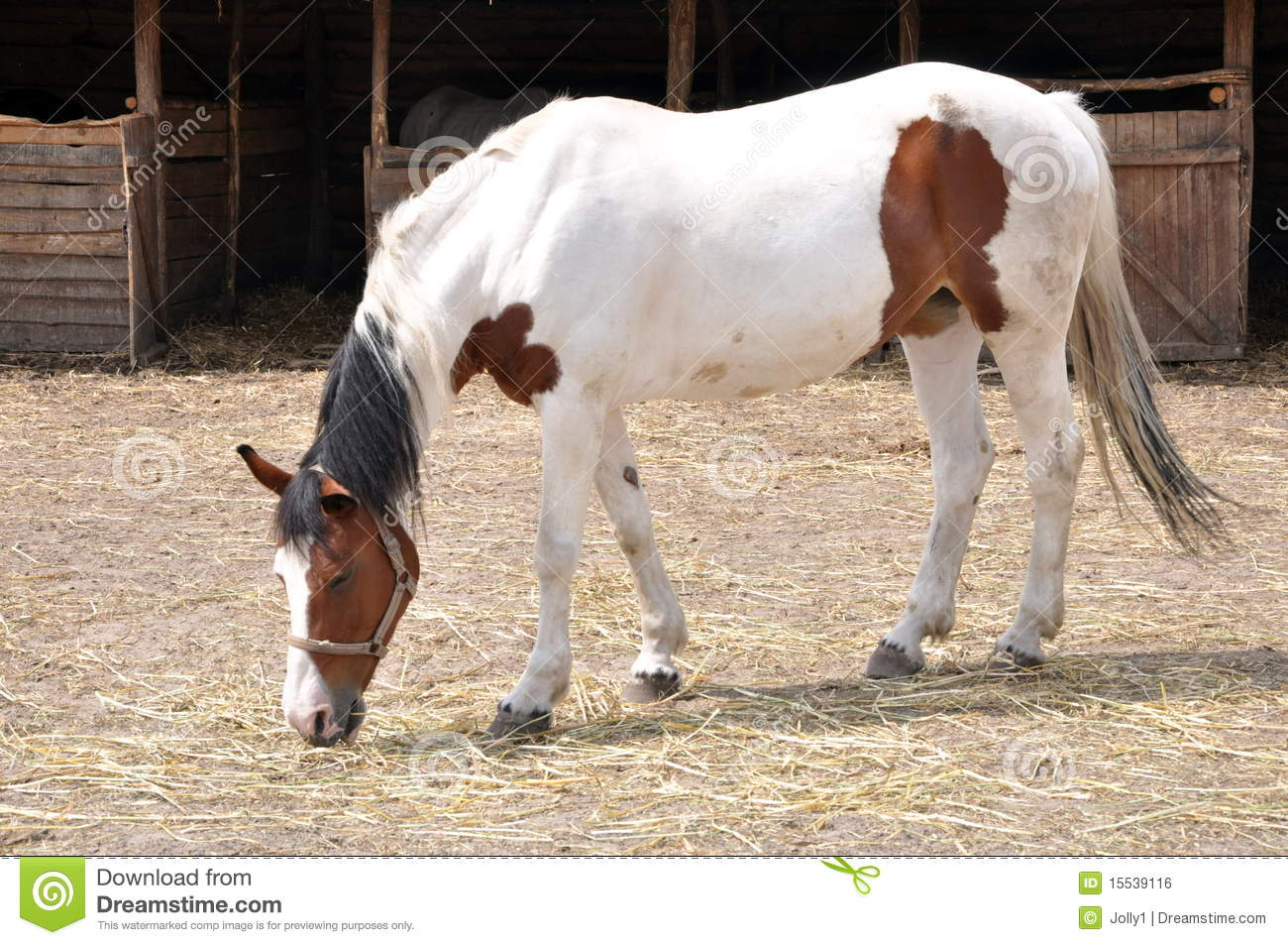 Brown And White Horse Stock Photo Image Of Race