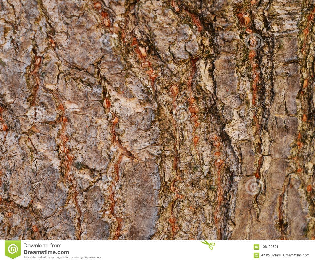 Brown bark for background