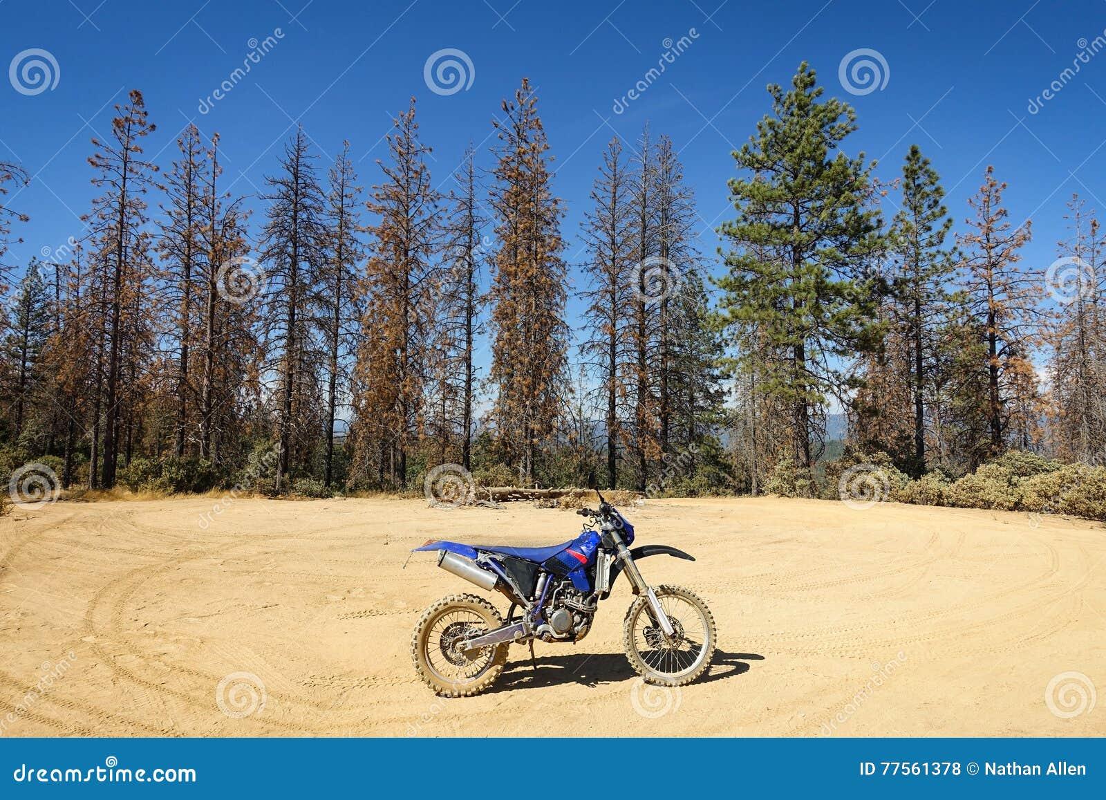 Brudu rower w lesie