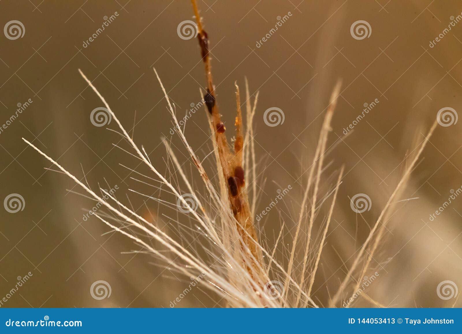 Bruin beige stijf multi-branched takje