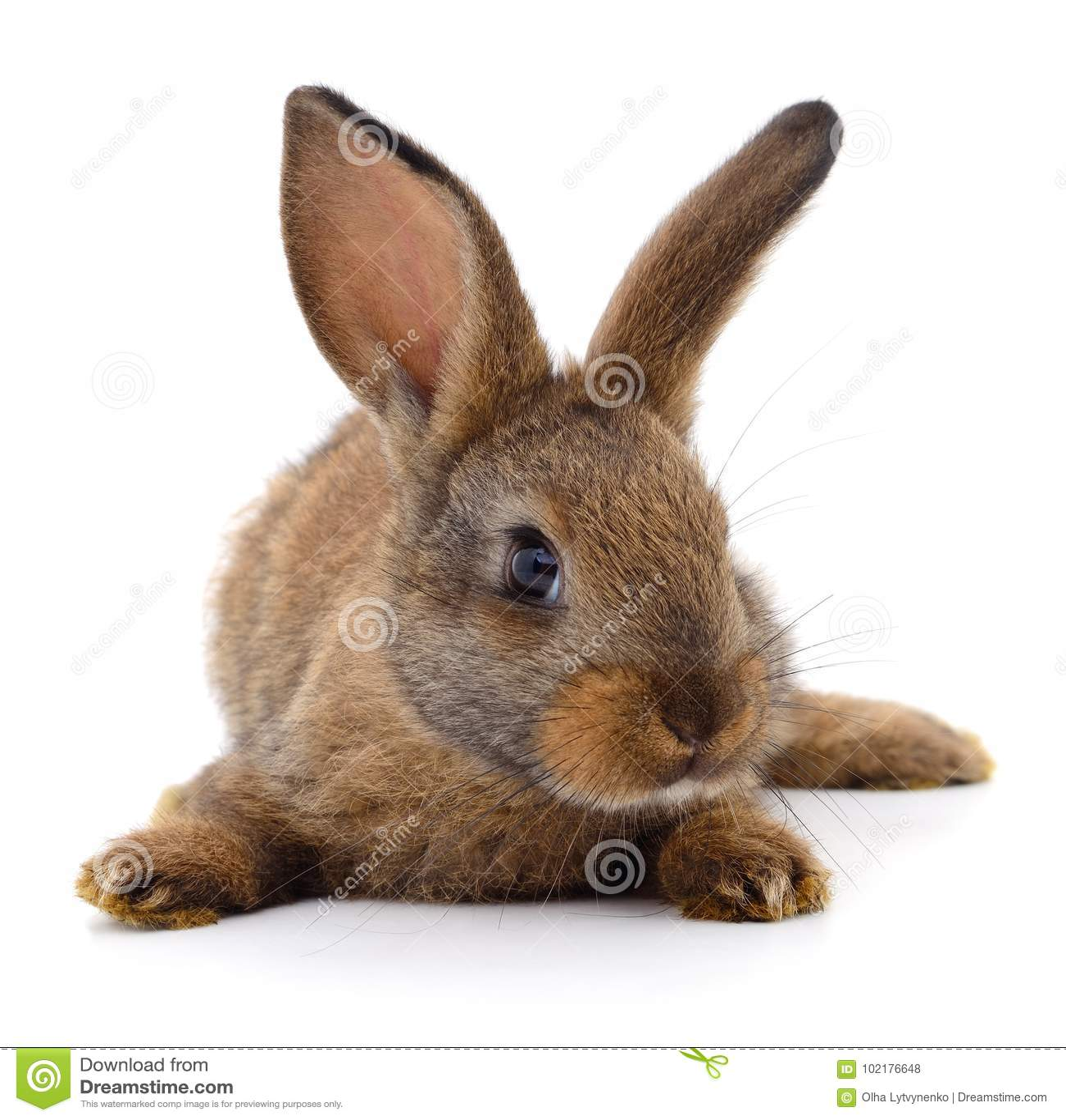 Bruin konijn op wit