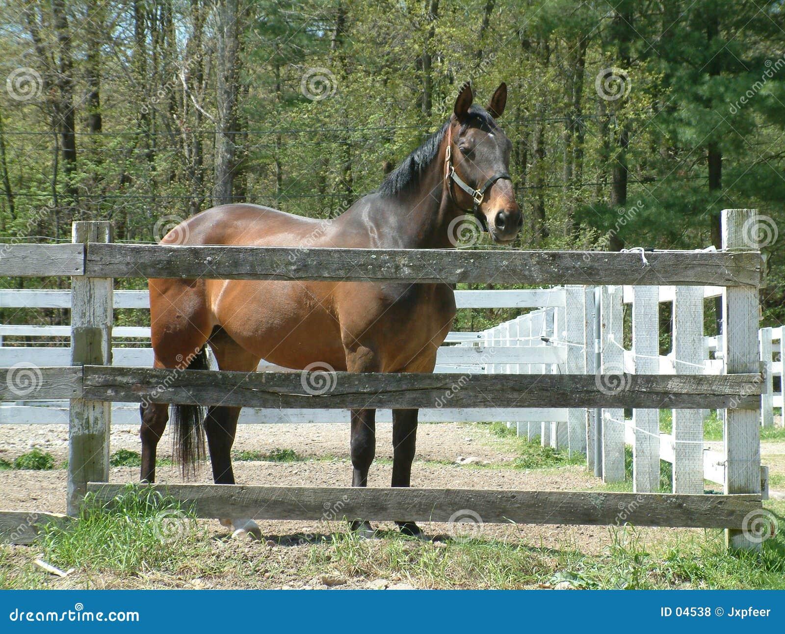Bruin paard bij de stal